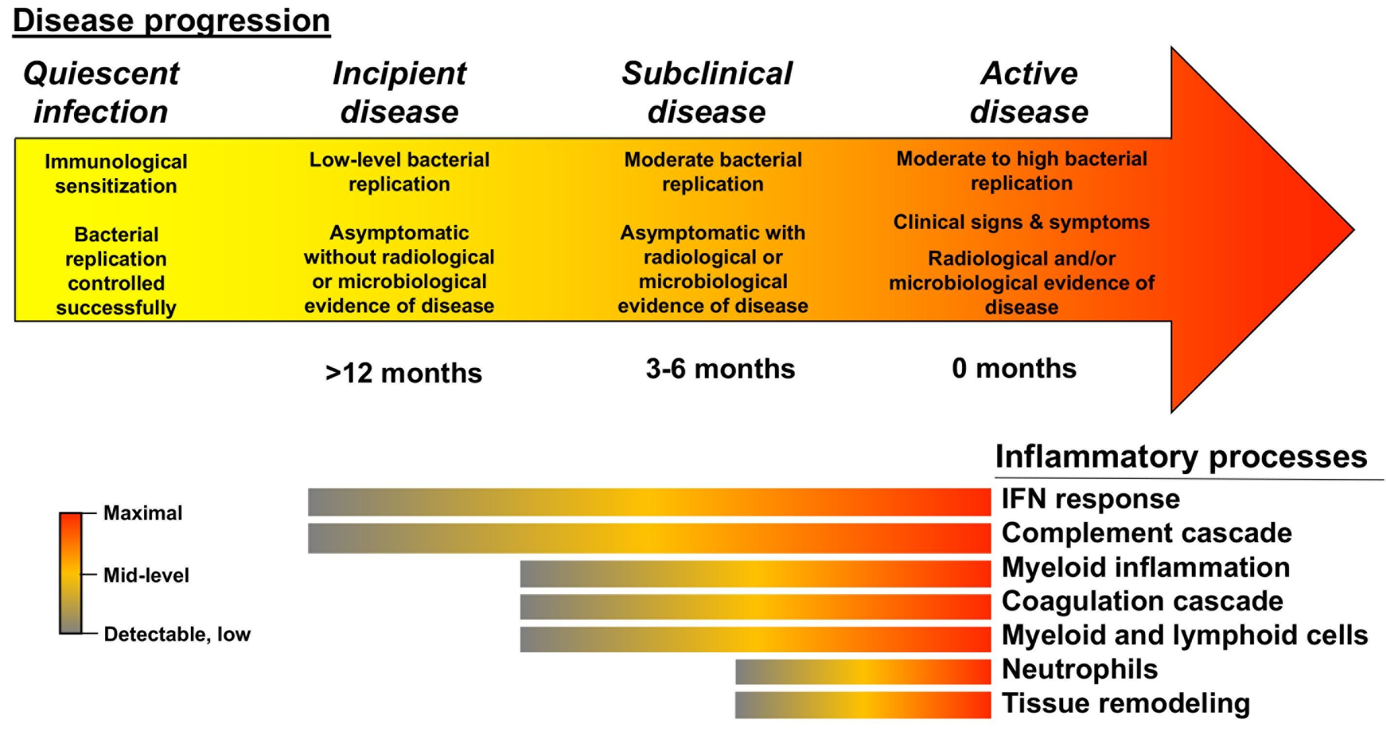 progression from infection to pulmonary tuberculosis follows