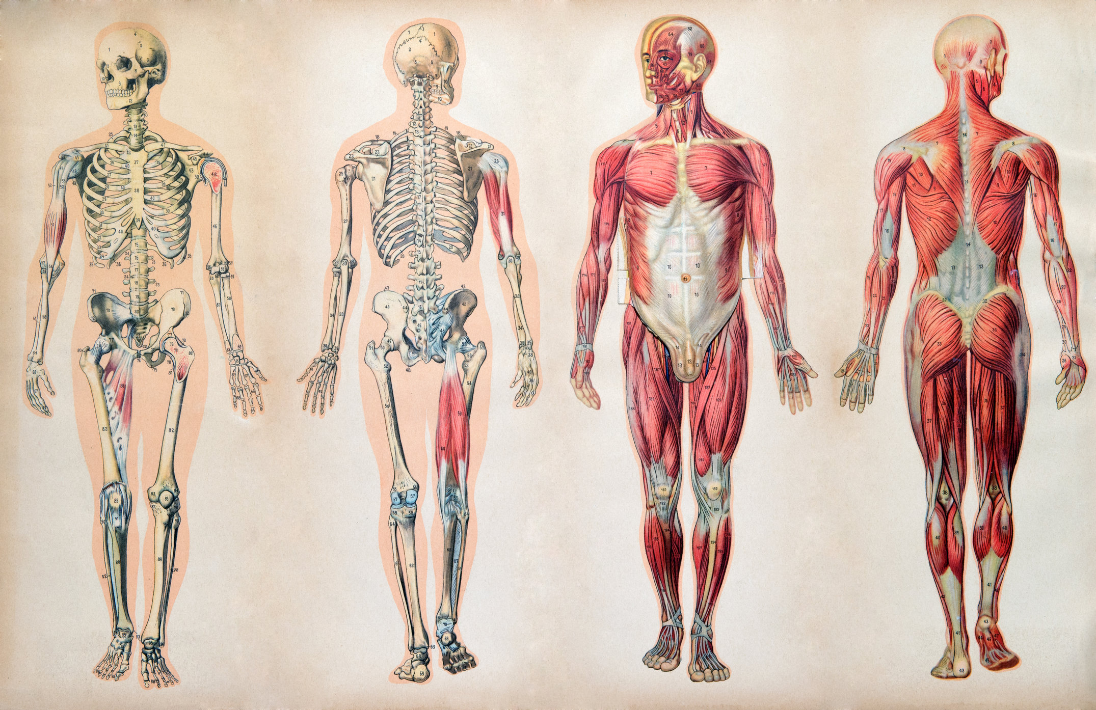 Publics Poor Knowledge Of Anatomy May Hamper Healthcare