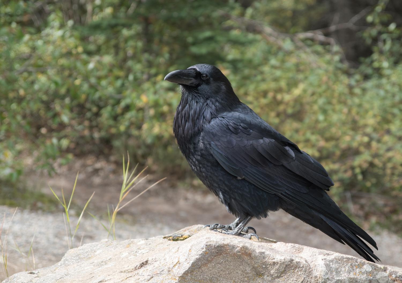 Raven Nude Photos 90