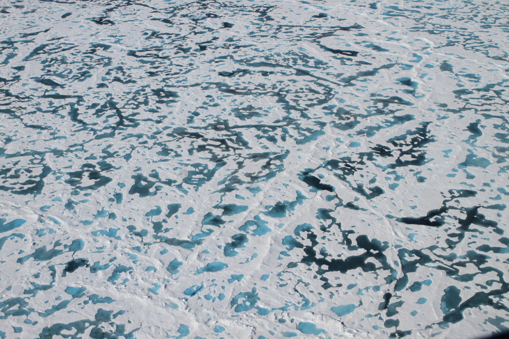 Thinning Arctic sea ice lets in light, prompts algae bloom