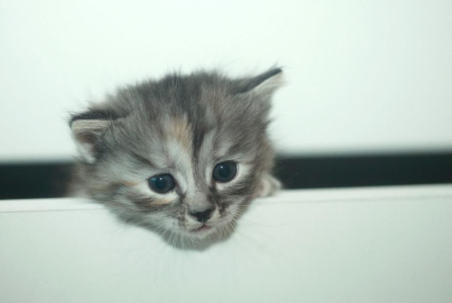 Cat Site Shutterstock Com