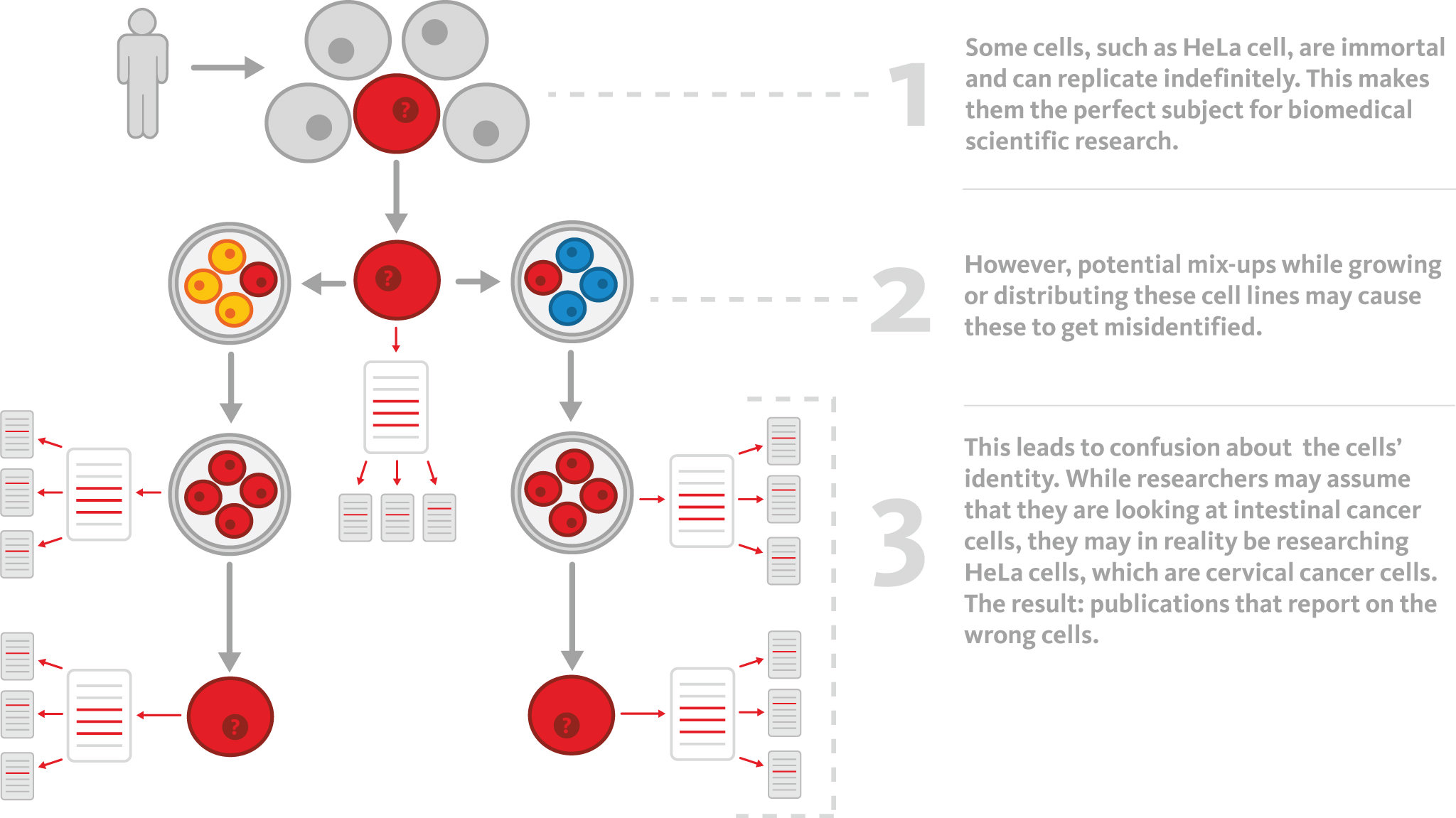 the hela cell line and the cervical cancer case of henrietta lacks Sample of henrietta lacks  eternal human cell line with a sample extracted from black woman suffering from the cervical cancer those cells, hela.