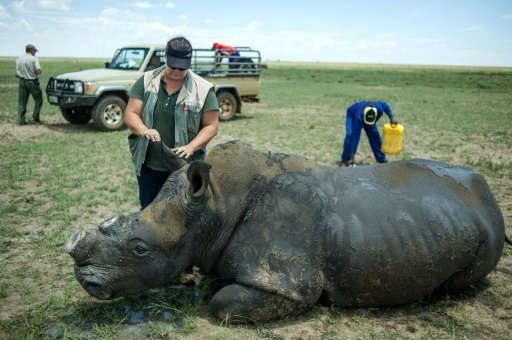 South African court approves rhino horn auction — GRAPHIC IMAGES