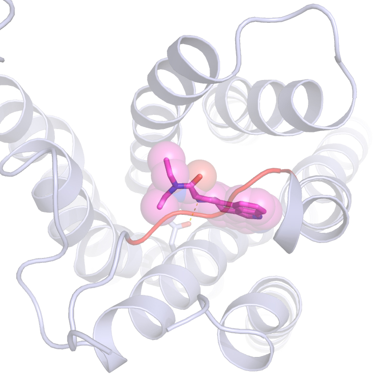 This Is Lsd Attached To A Brain Cell Serotonin Receptor Update