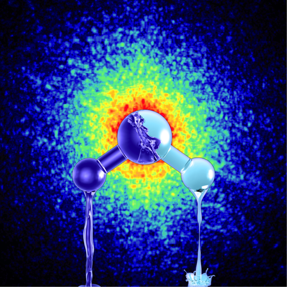 Water exists in two distinct liquid phases