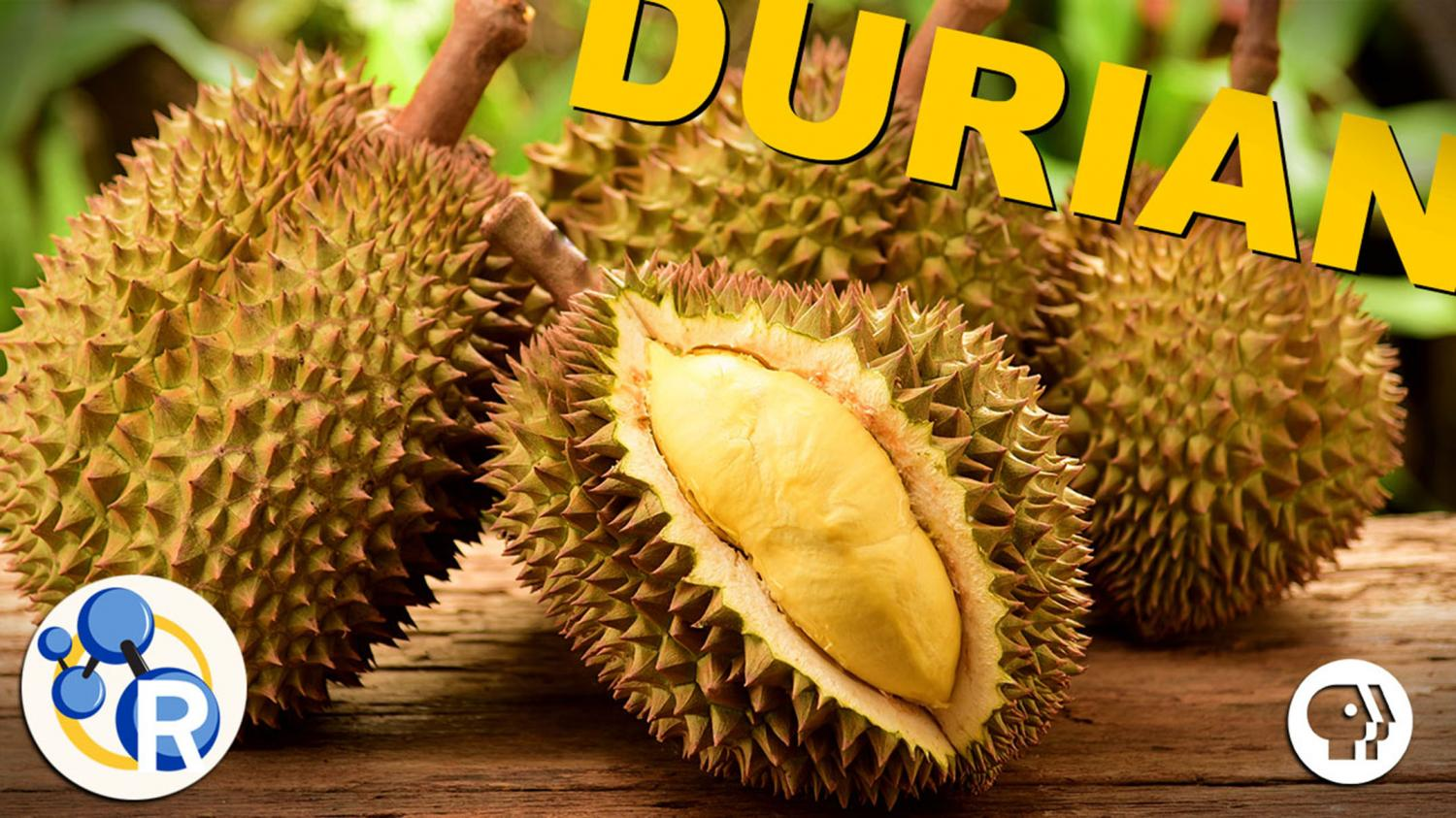 smelly fruit durian fruit