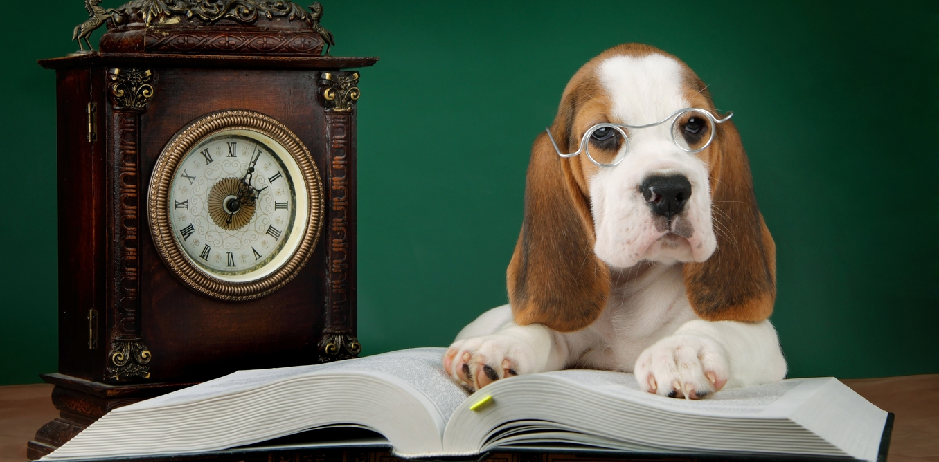 Watch Ebola and Your Pets: What You Need to Know video