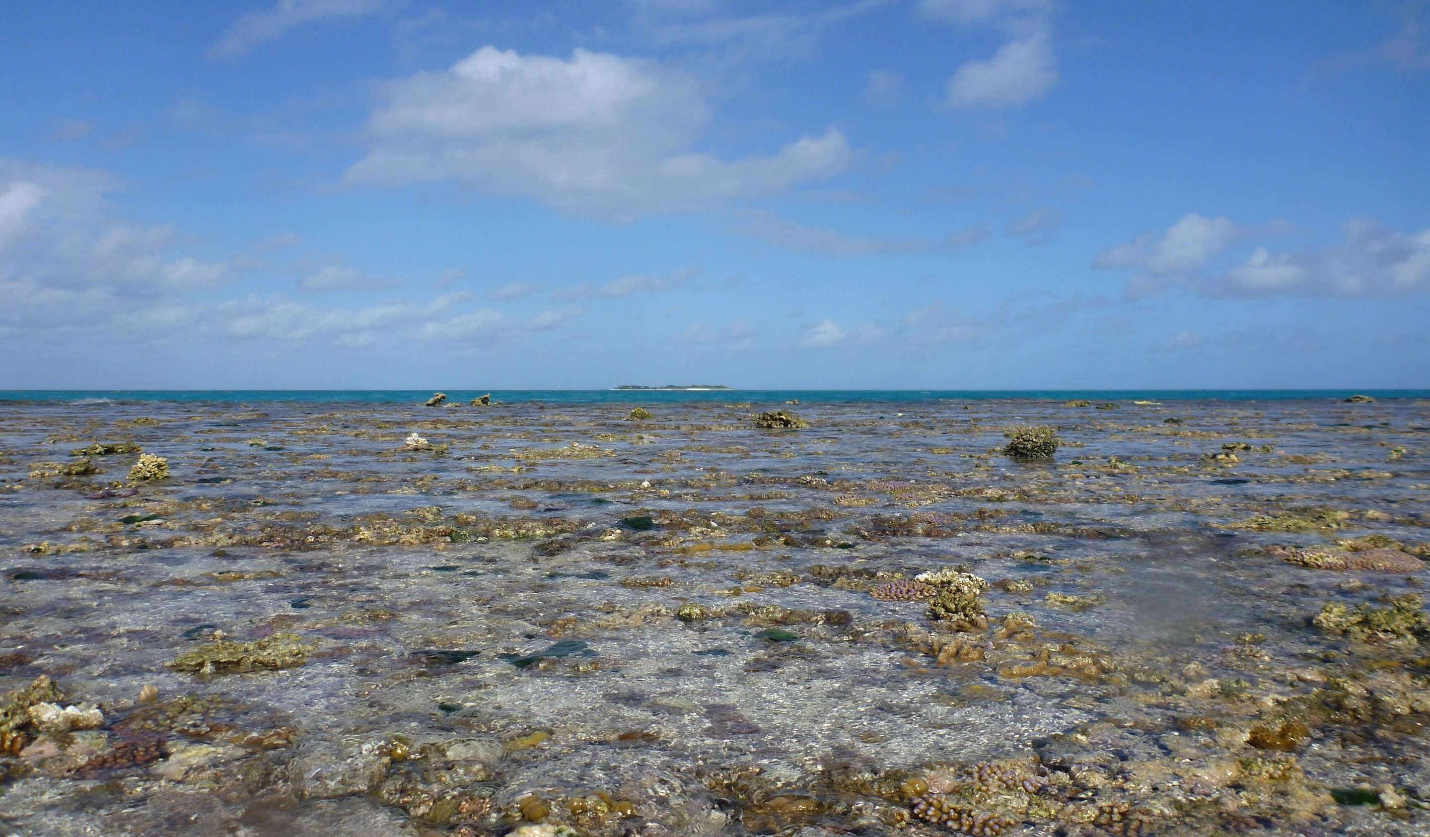 coral reef experiment shows acidification from carbon dioxide slows