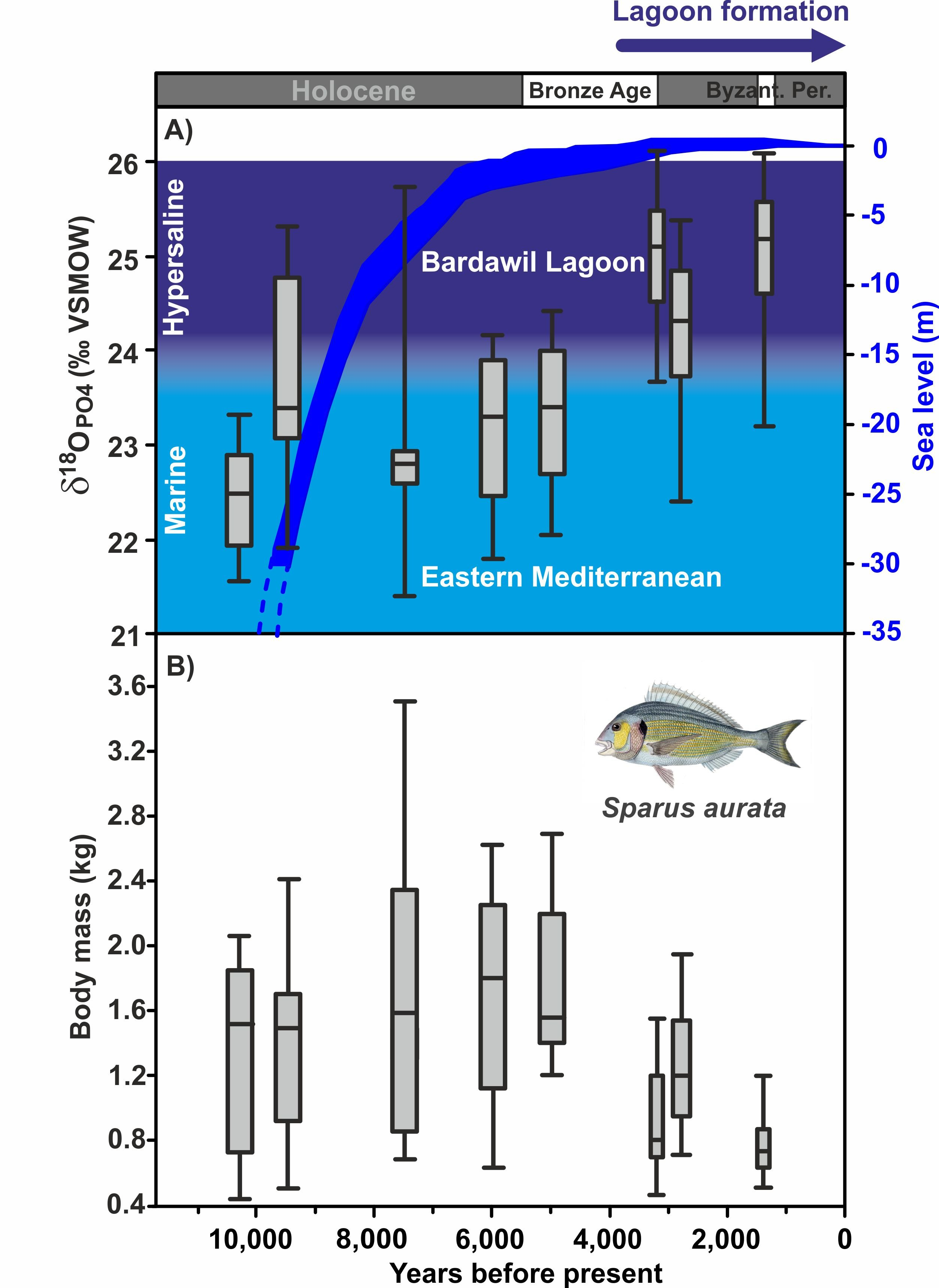 Extensive trade in fish between Egypt and Canaan 3,500 years ago