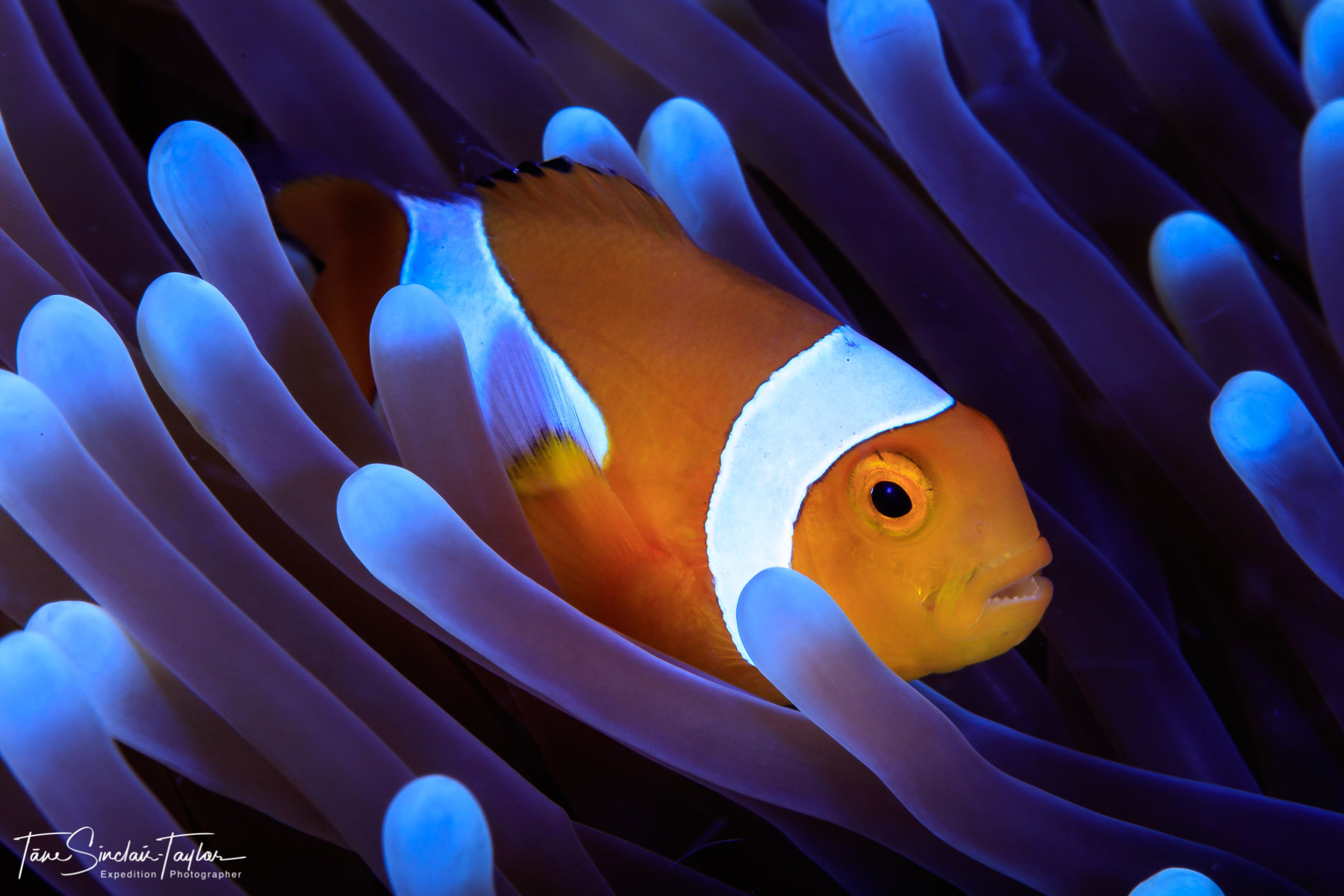 Finding Nemo S Genes