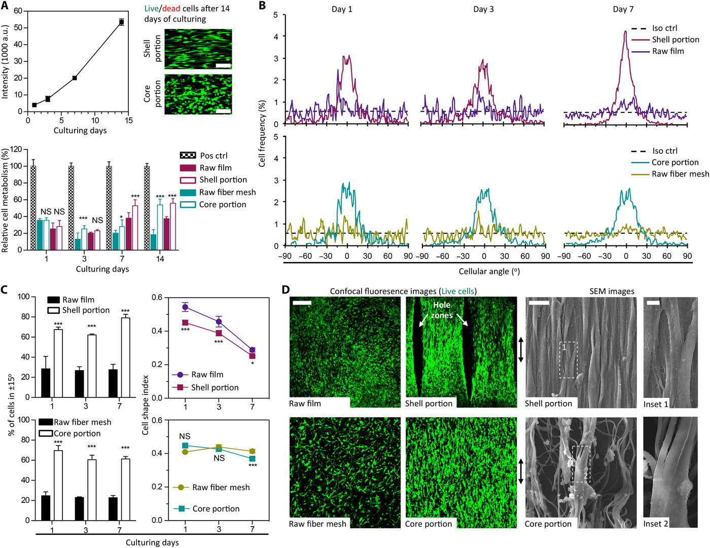 Functional Regeneration of Tendons Using Scaffolds Developed via Microarchitectural Engineering