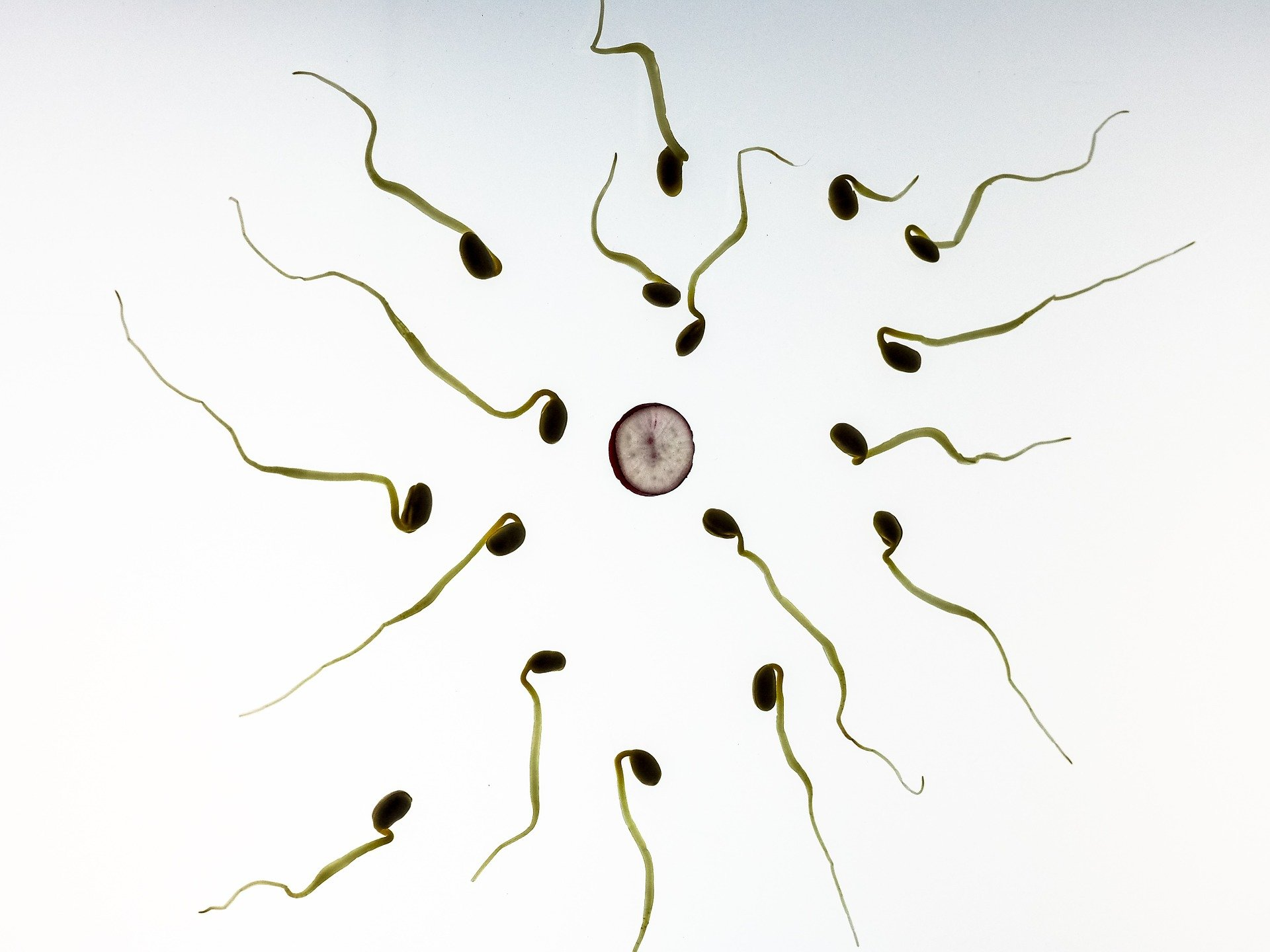 There Isn't One Kind Of 'good Sperm'