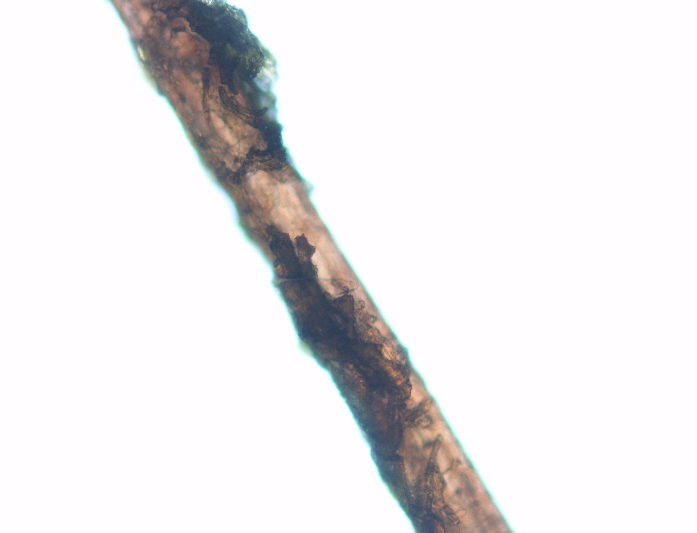 Natural Hair Strand For Density Test