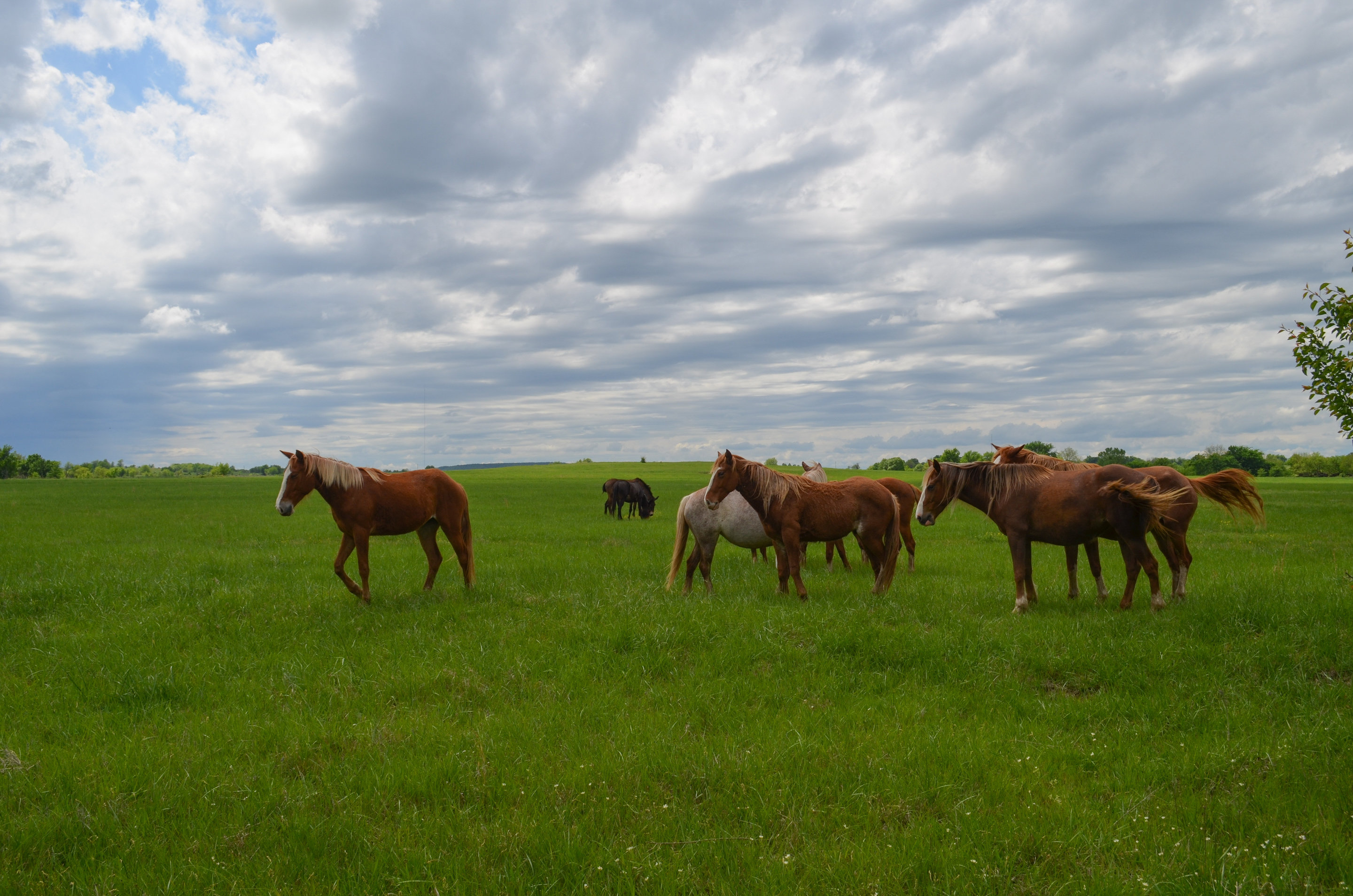 100th meridian where the great plains begin may be shifting with the camera looking west horses graze about 300 miles east of the 100th meridian this area could become dryer if current projections of climate play publicscrutiny Choice Image