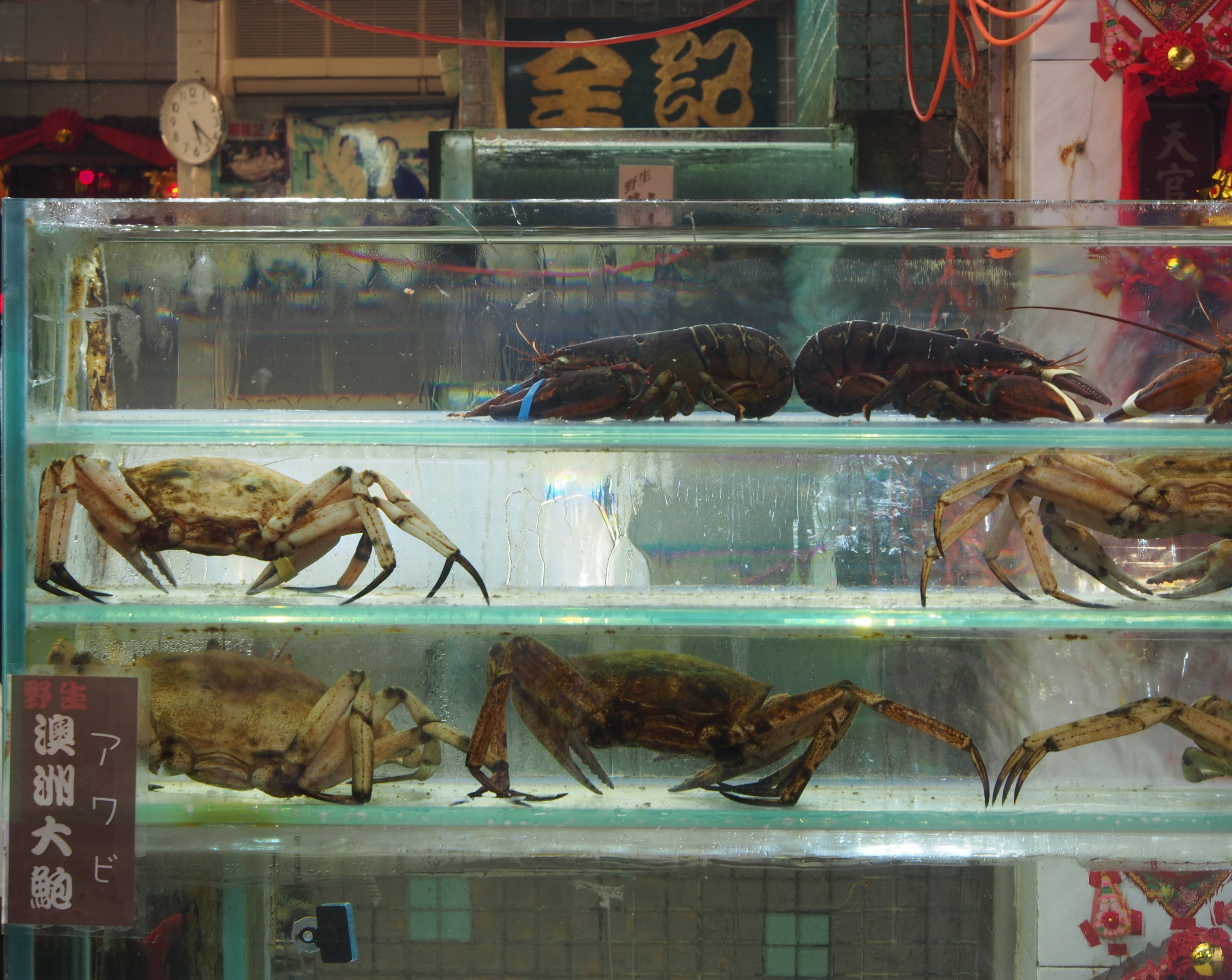 photo image The secret life of lobster (trade): Could we be in hot water?
