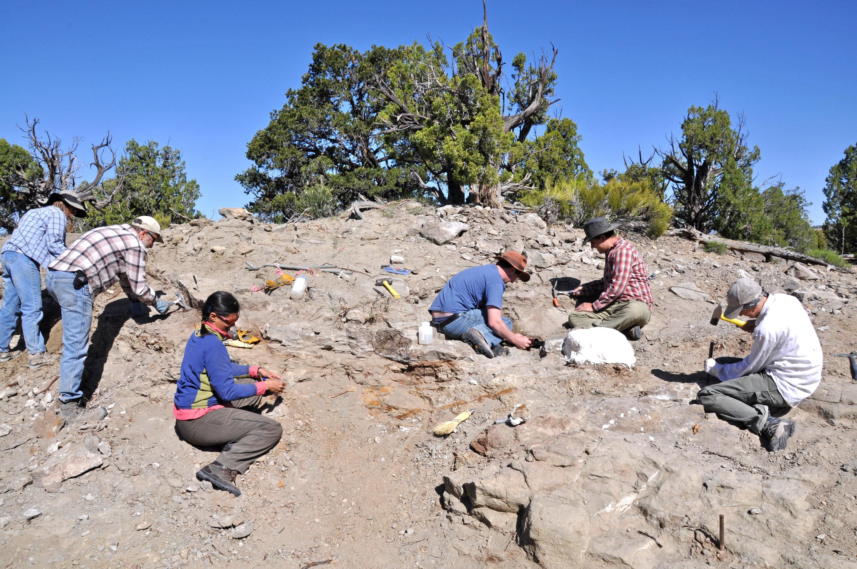 Un dinosaurio acorazado recién descubierto de Utah revela una ...