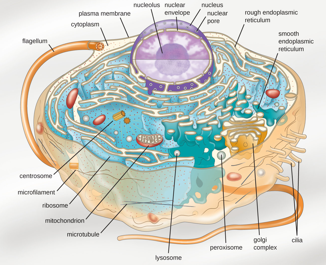 synthetic organelle shows how tiny puddle