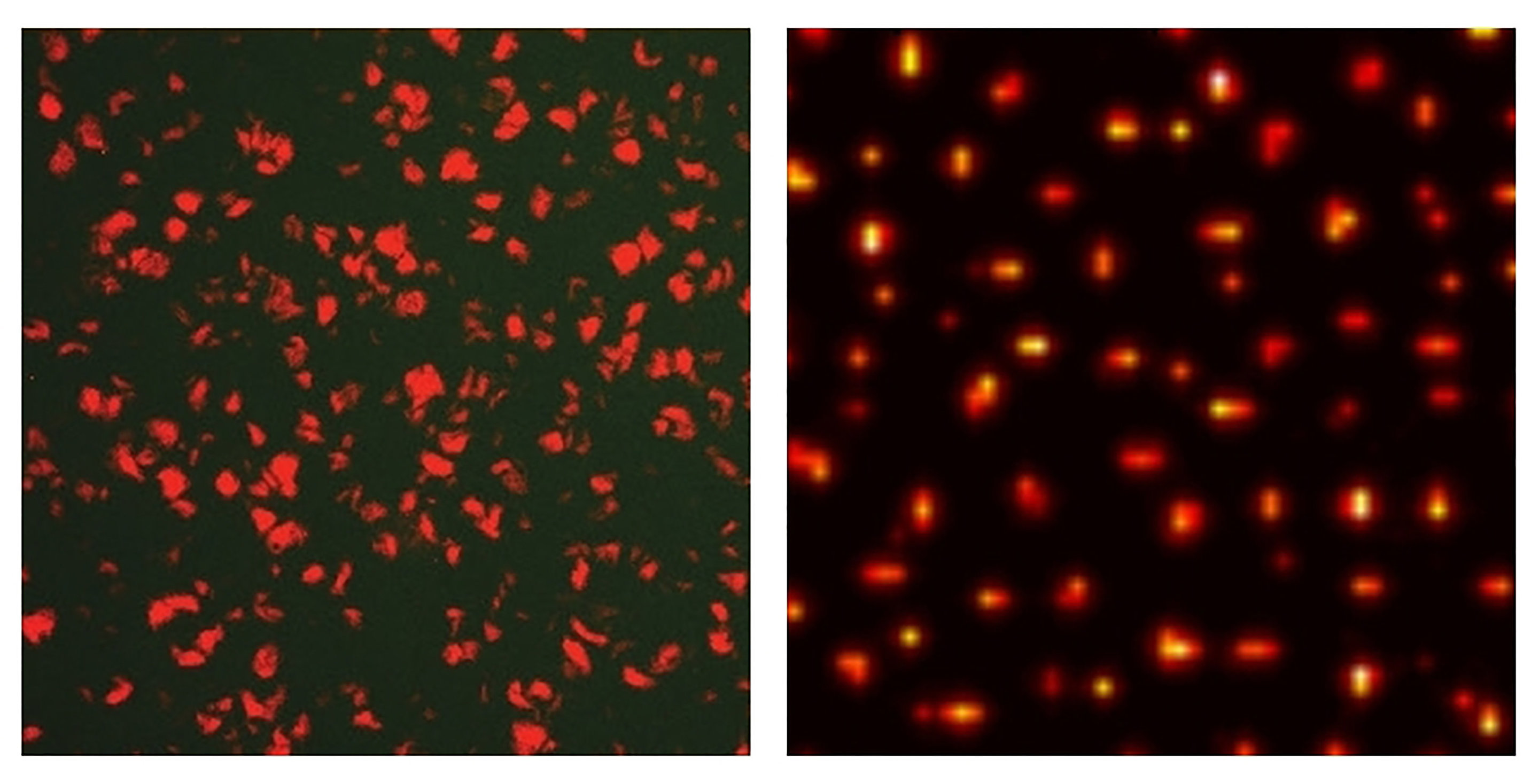 Researchers engineer bacteria to exhibit stochastic Turing patterns