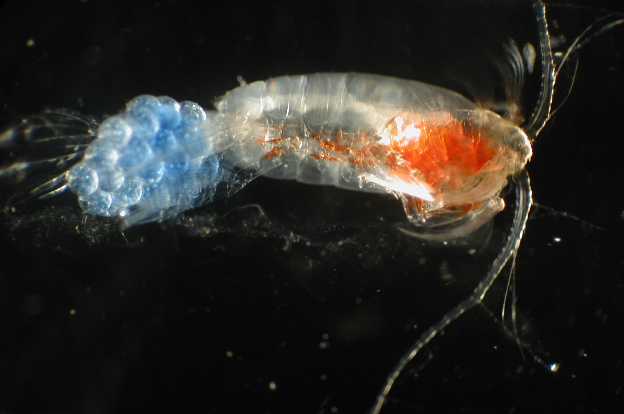 Scientists are using DNA to study ocean life and reveal ...