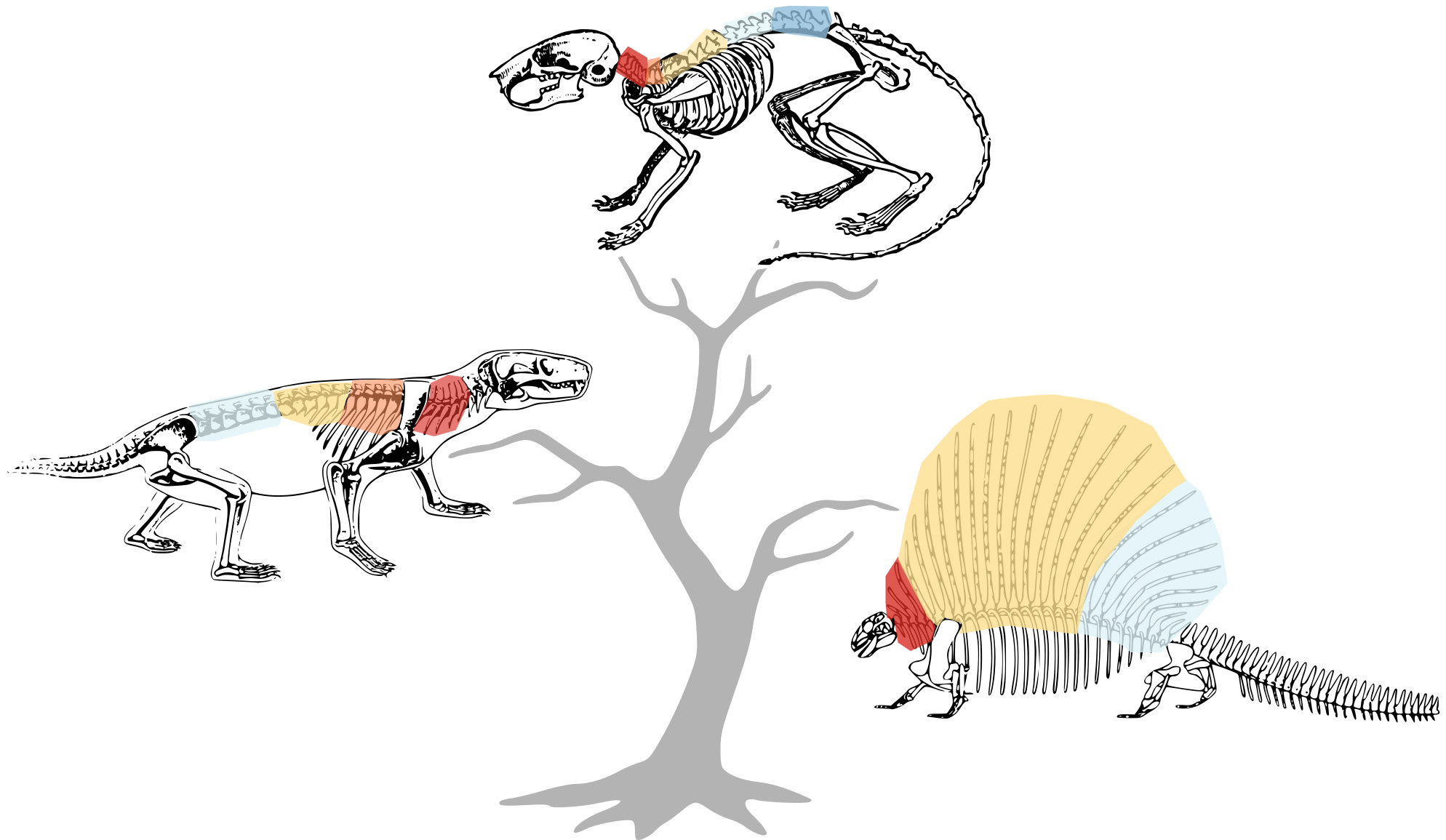 What Makes A Mammal A Mammal Our Spine Say Scientists