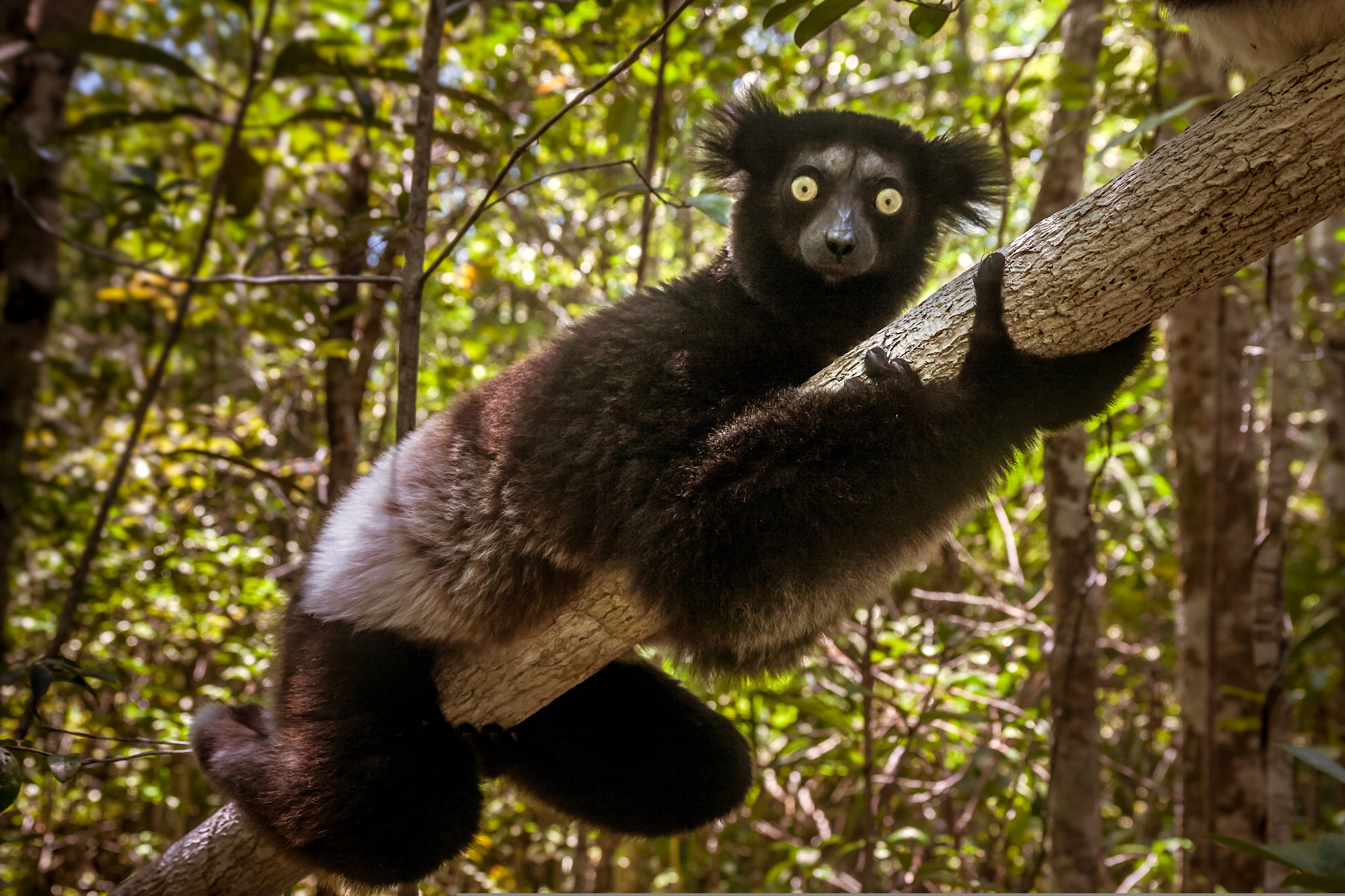 Mammals cannot evolve fast enough to escape current ...