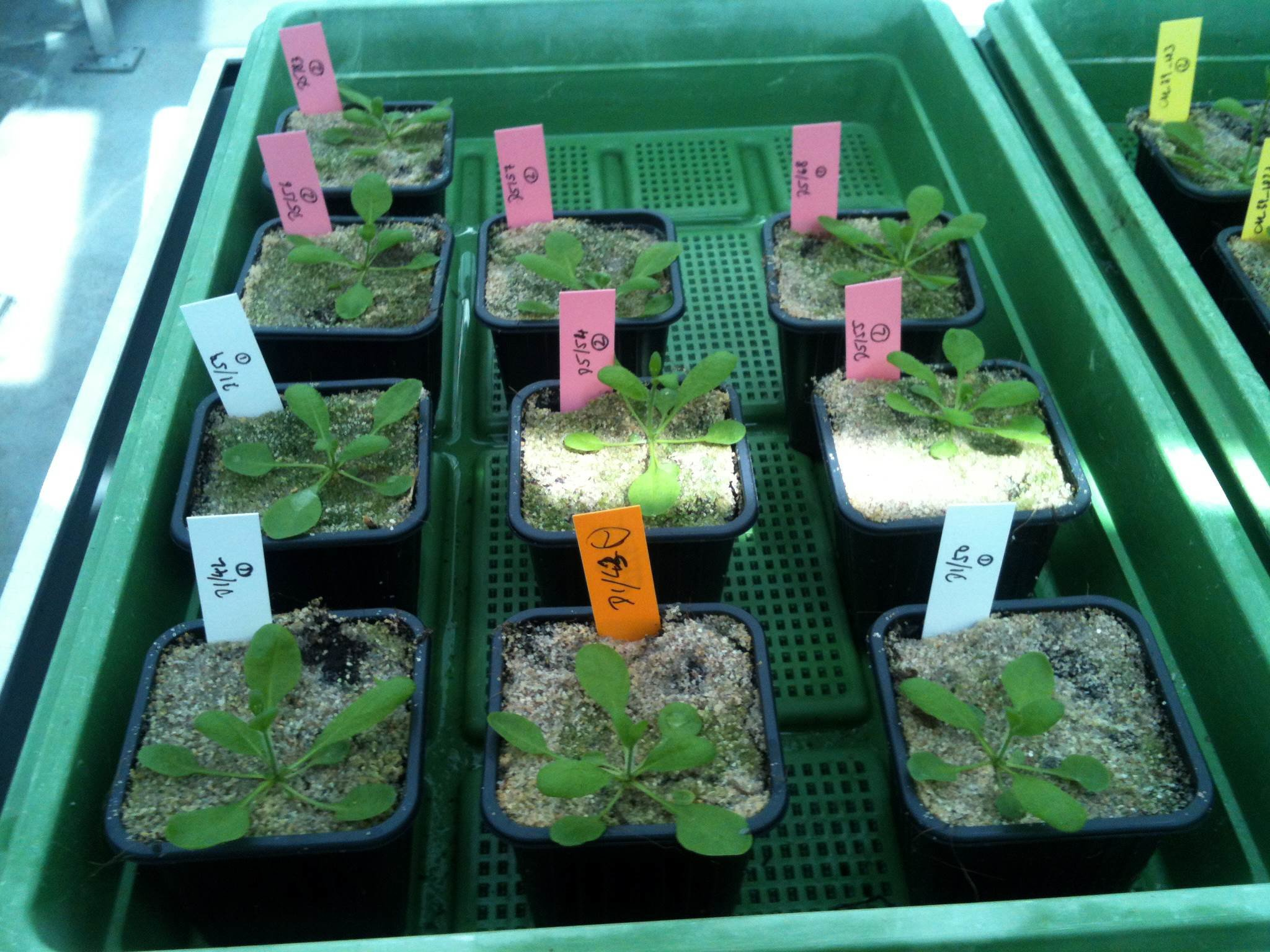 Exploiting epigenetic variation for plant breeding