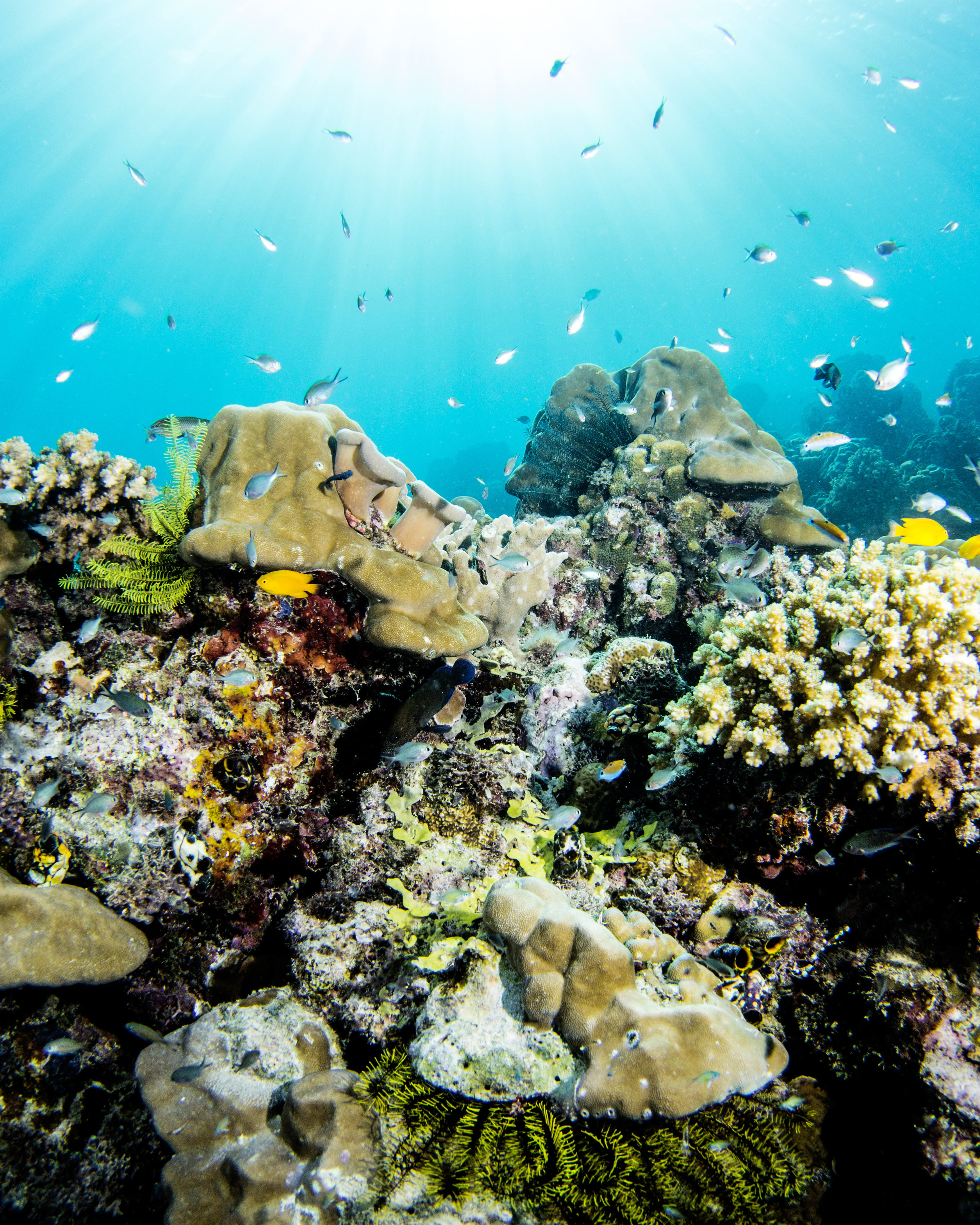 Great Barrier Reef not bouncing back as before, but there ...