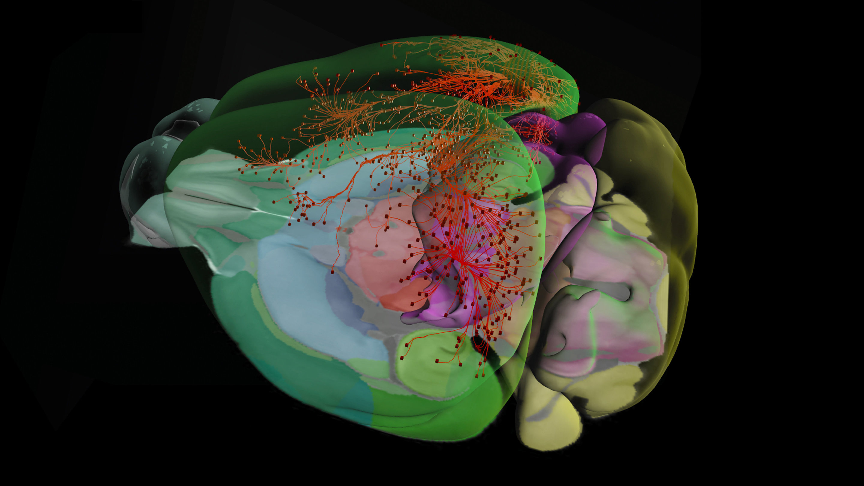 Allen Institute for Brain Science database release nearly doubles ...