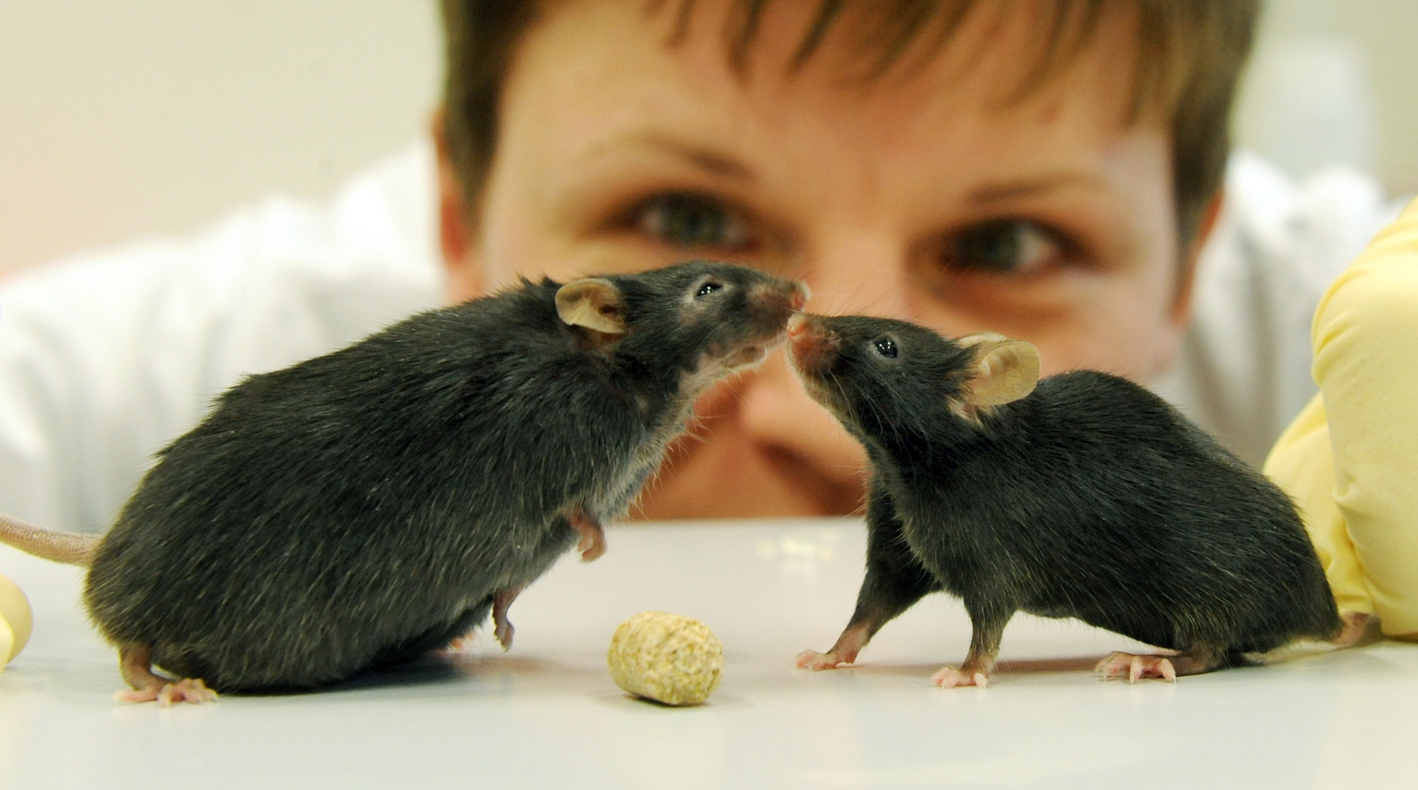 """is animal testing necessary Those in favor of animal testing argue that experiments on animals are necessary to advance medical and biological knowledge claude bernard, known as the father of physiology, stated that """"experiments on animals are entirely conclusive for the toxicology and hygiene of man."""