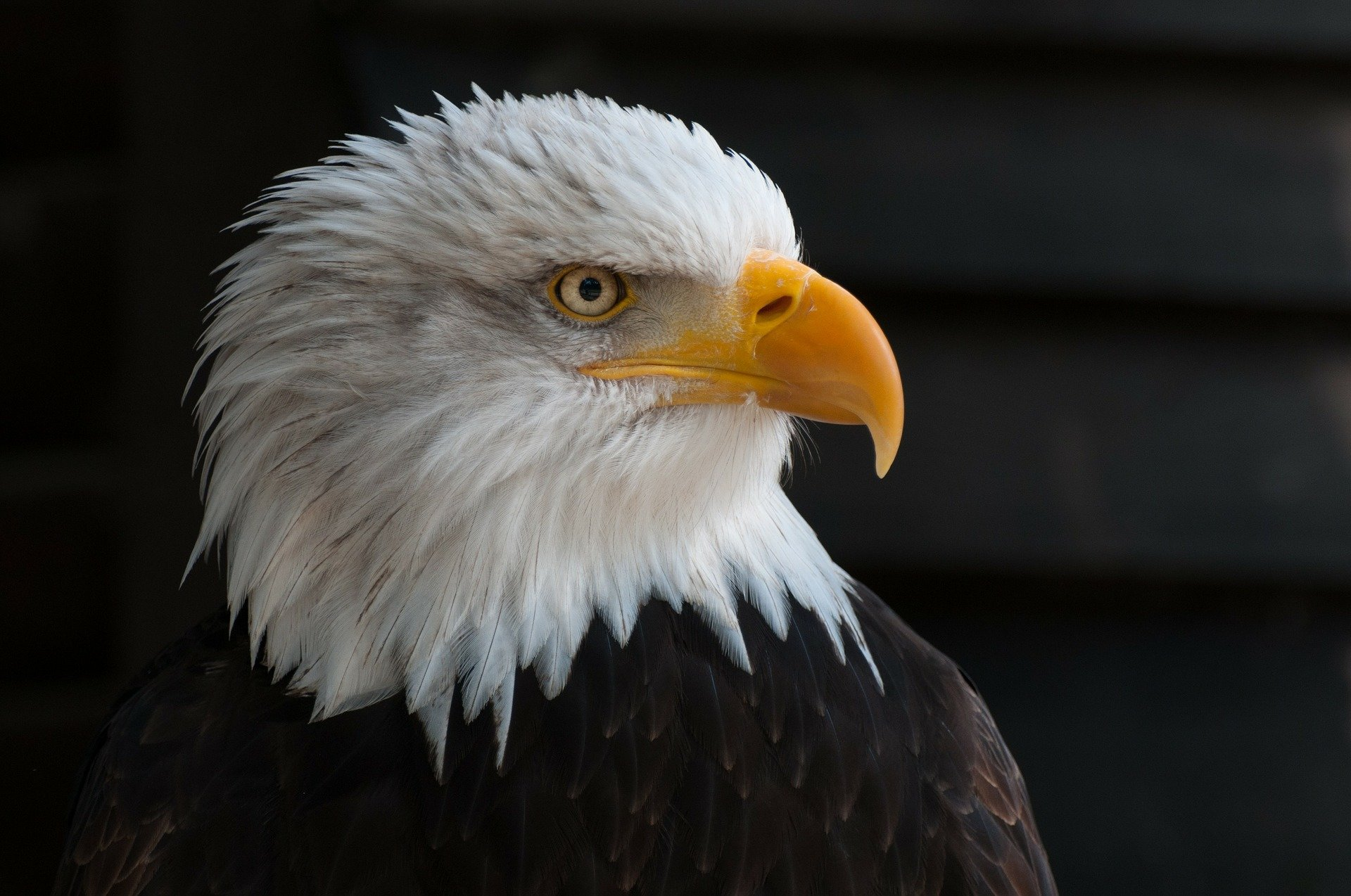 Majestic Eagles: Compelling Facts and Images