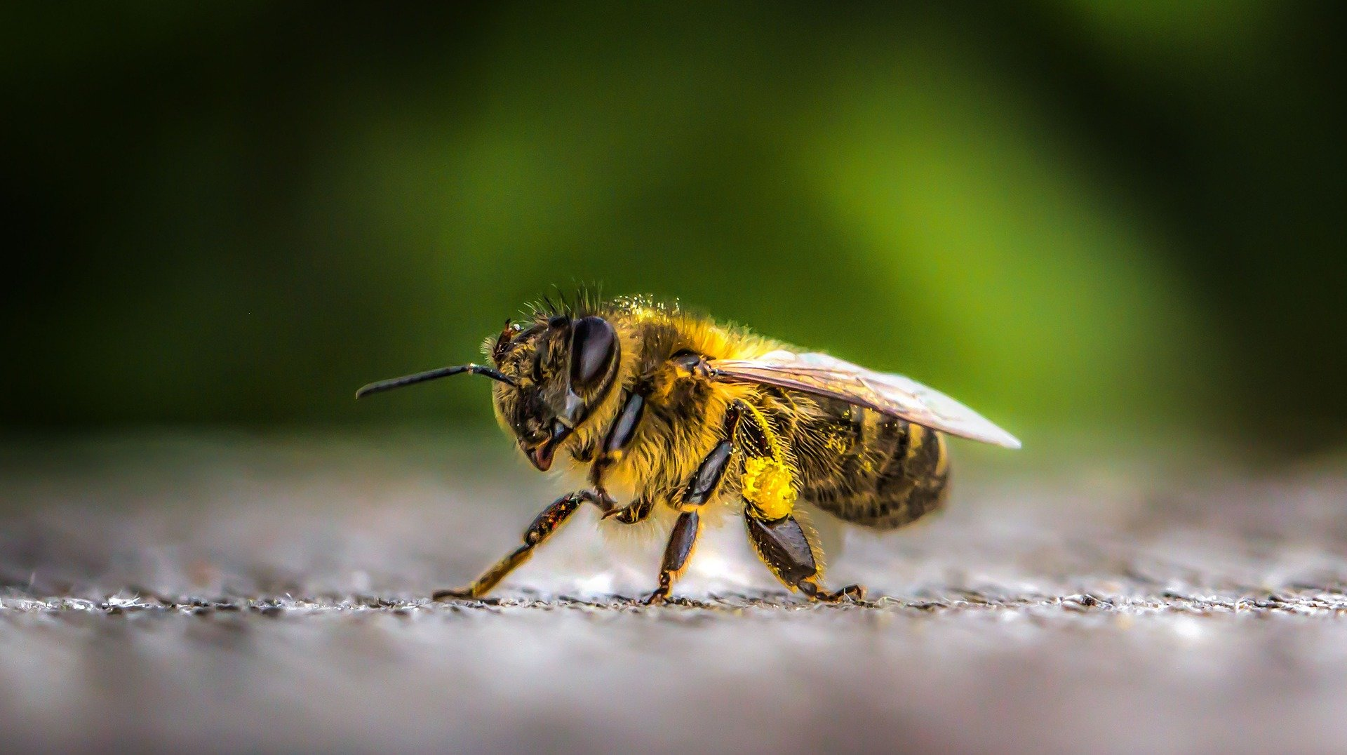 What gives bees their sweet tooth?