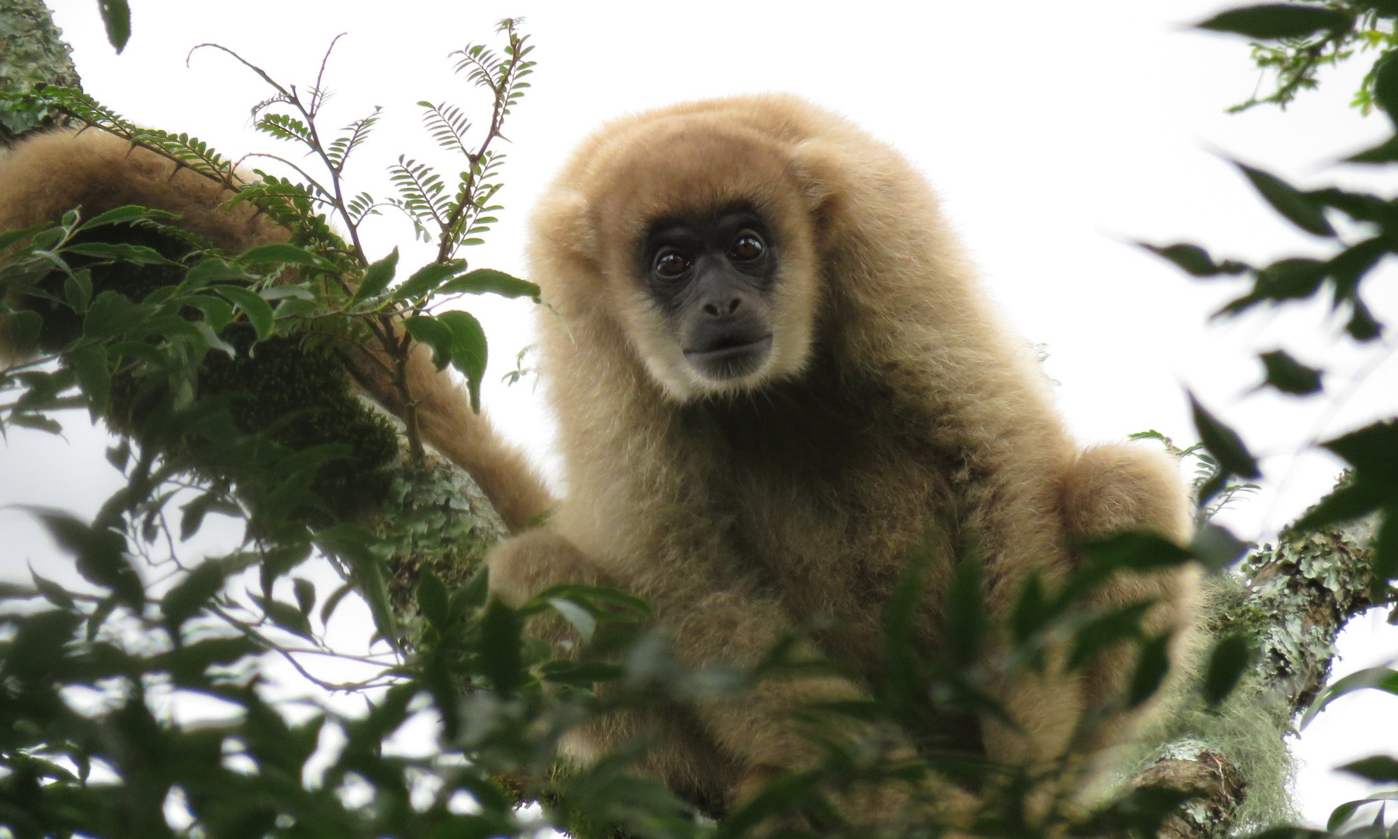 Canopy cameras shed new light on monkey business in Brazil
