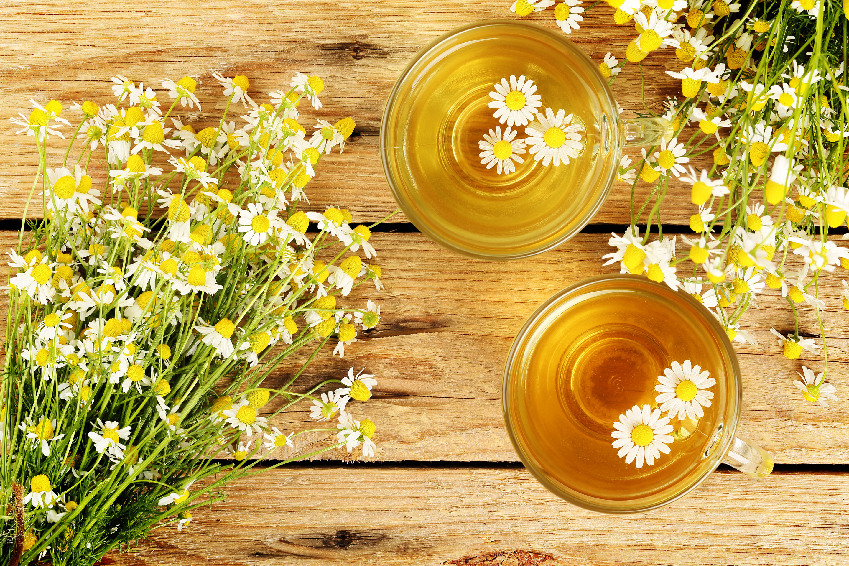 Chamomile tea may help control diabetes as my research into 19th credit constantinoszshutterstock chamomile that yellow flower mightylinksfo