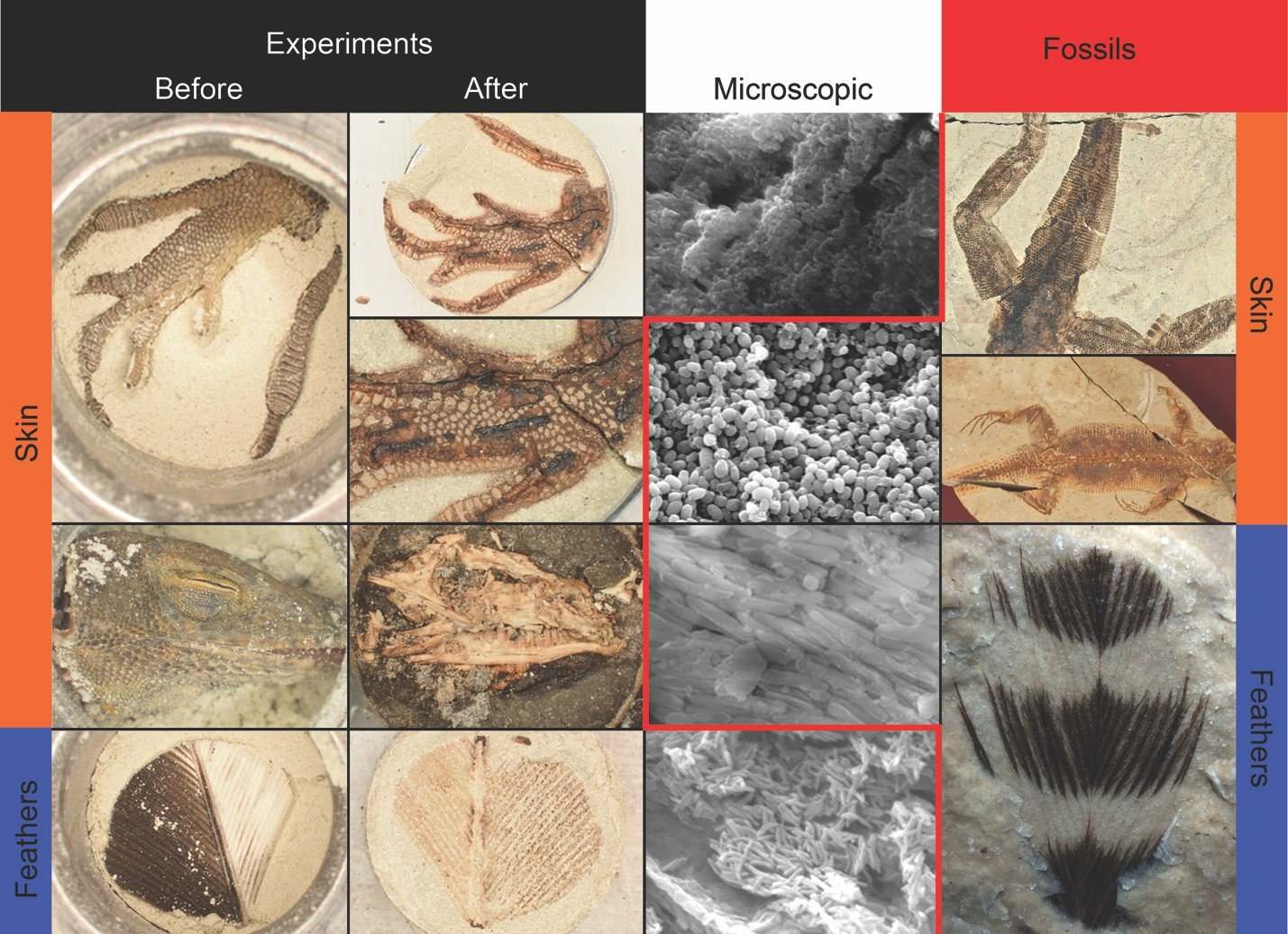creating synthetic fossils in the lab sheds light on fossilization