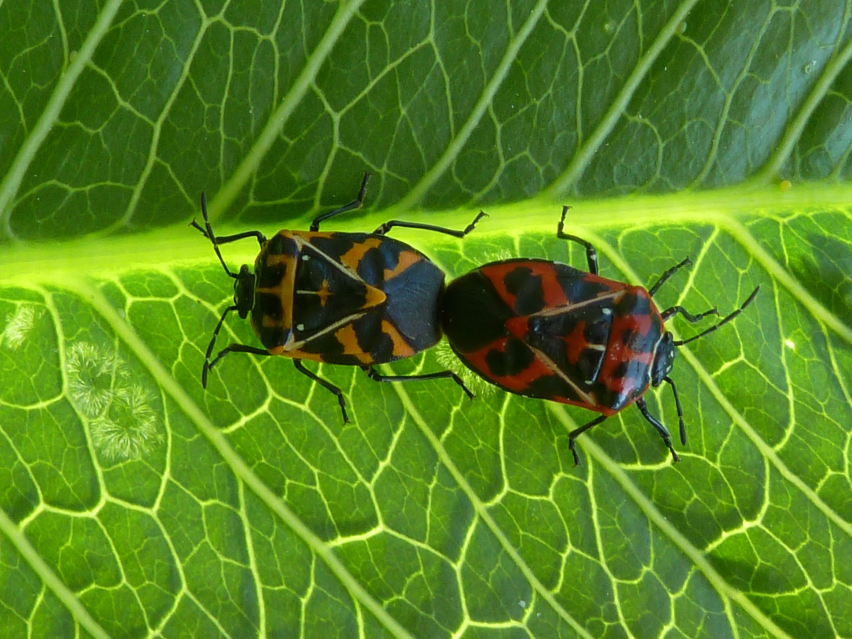 discovery can help farmers combat stink bugs save money on pest control