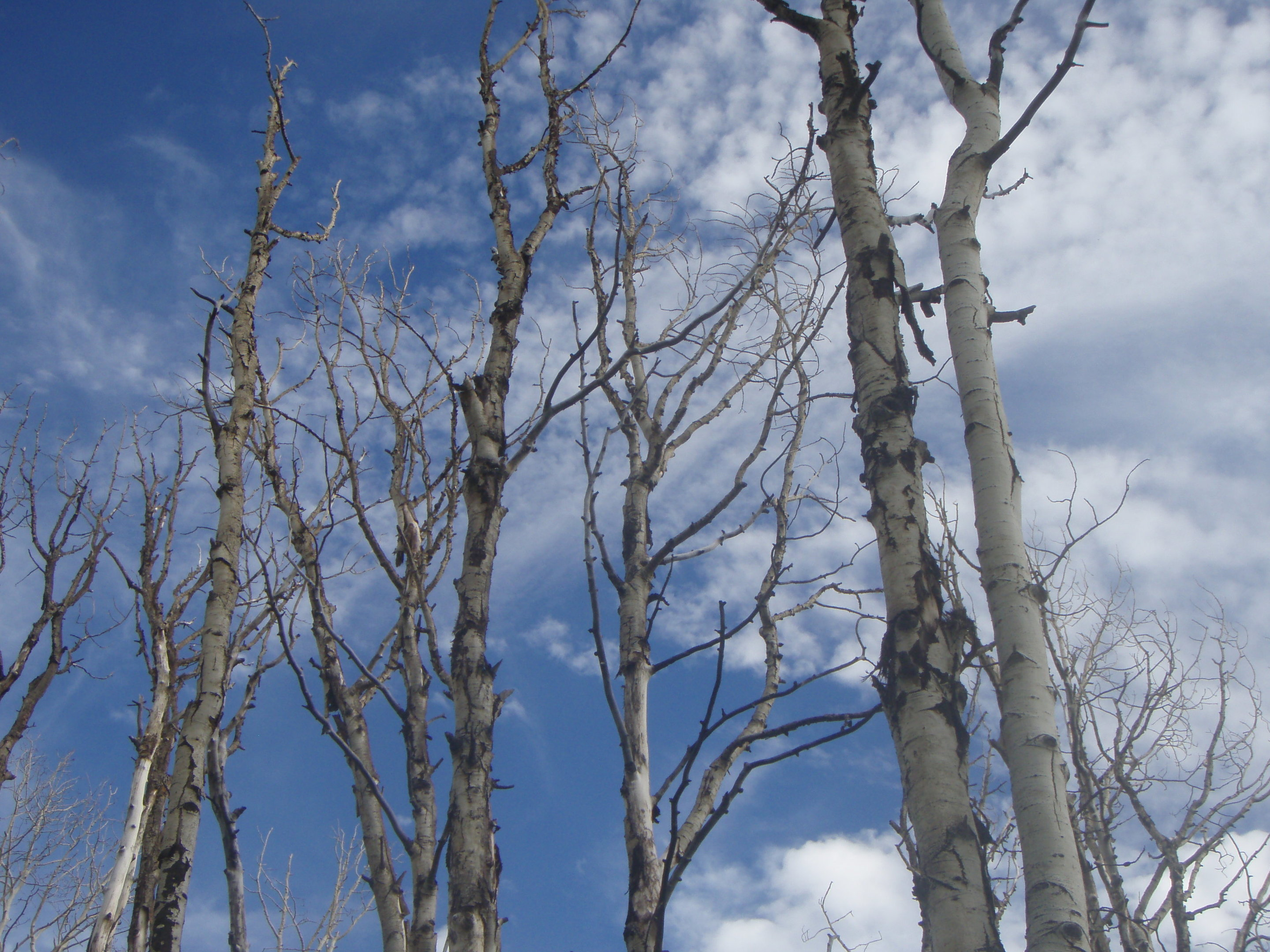 Diverse forests are stronger against drought
