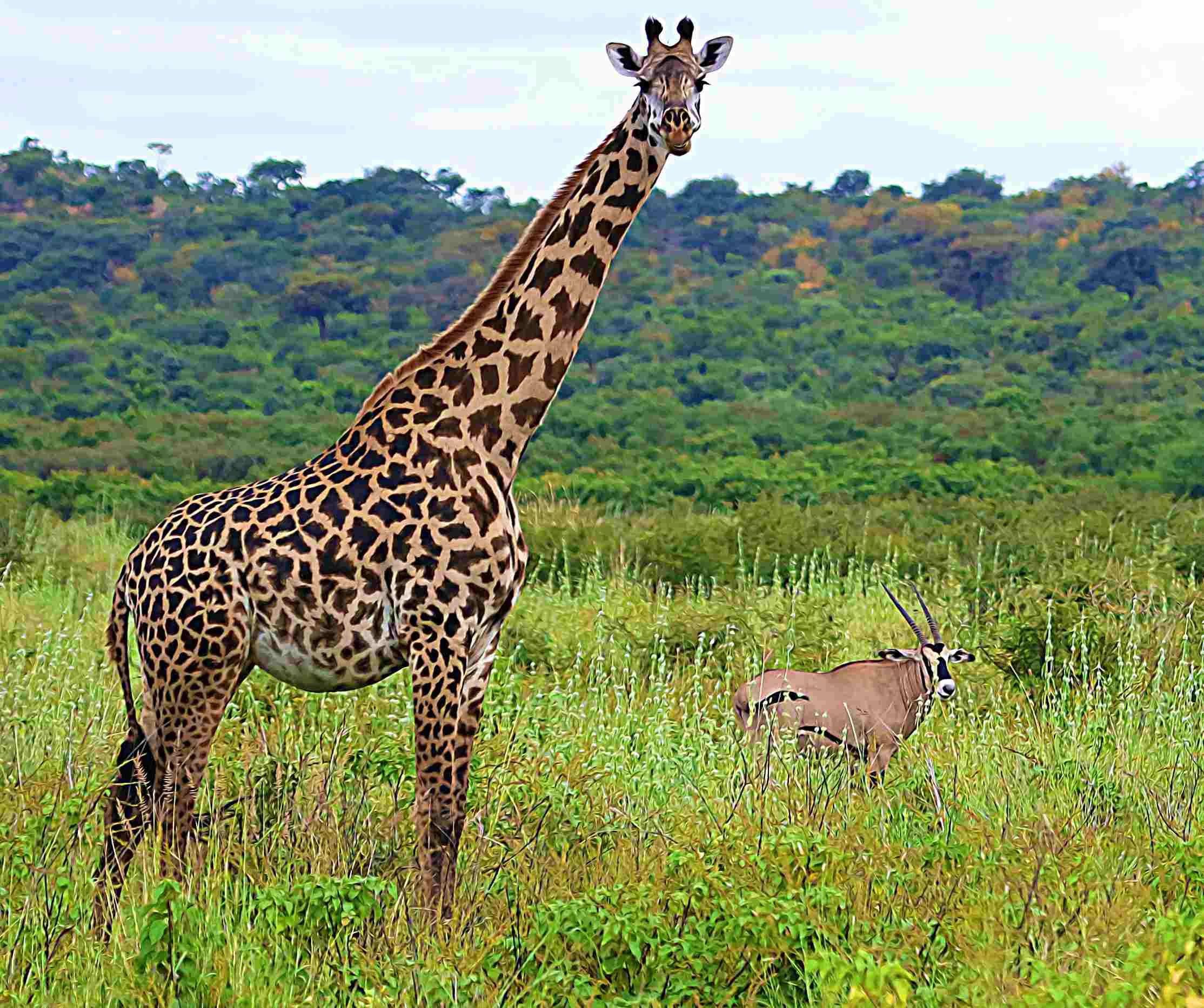 Ecological Success Of Community Based Wildlife