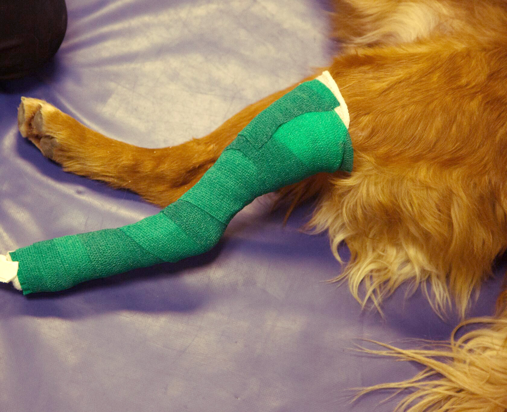 photo image For fewer cast-related ailments in dogs, researchers find taller casts a better fit