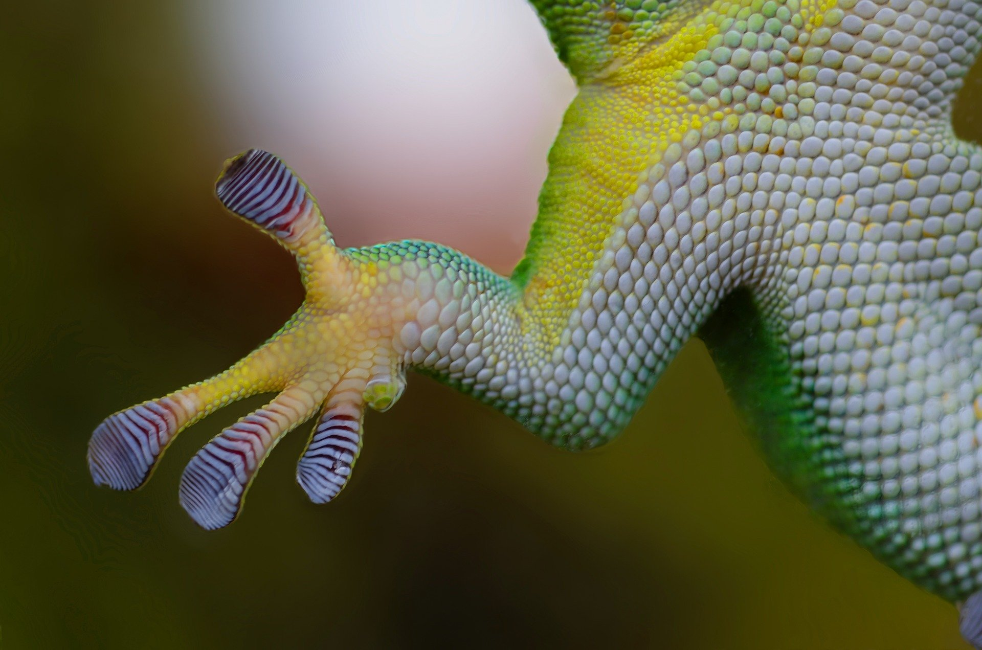 study finds evidence that leopard geckos can make new brain cells