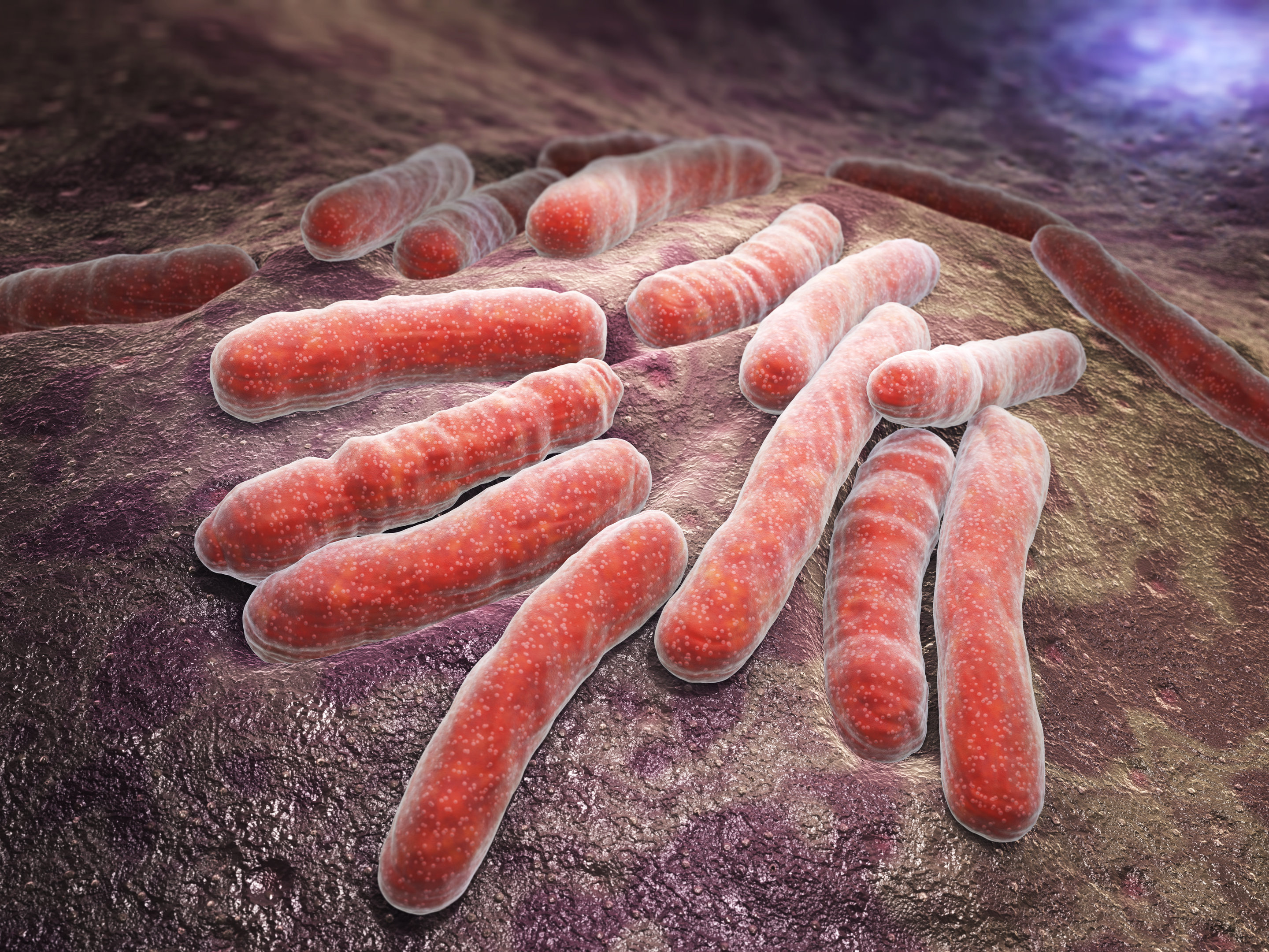 This study finds higher doses of rifampin may lead to faster elimination of TB bacteria. Credit: ATS via MedicalXpress.com