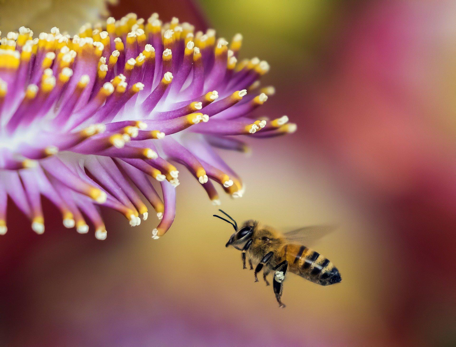 Honeybees found to have rightward bias under certain circumstances