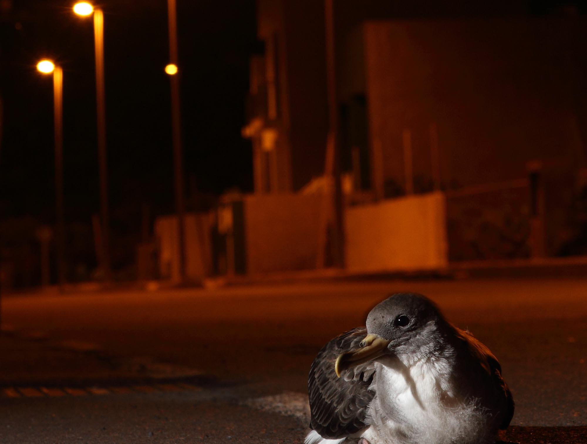 light pollution is altering plant and animal behaviour