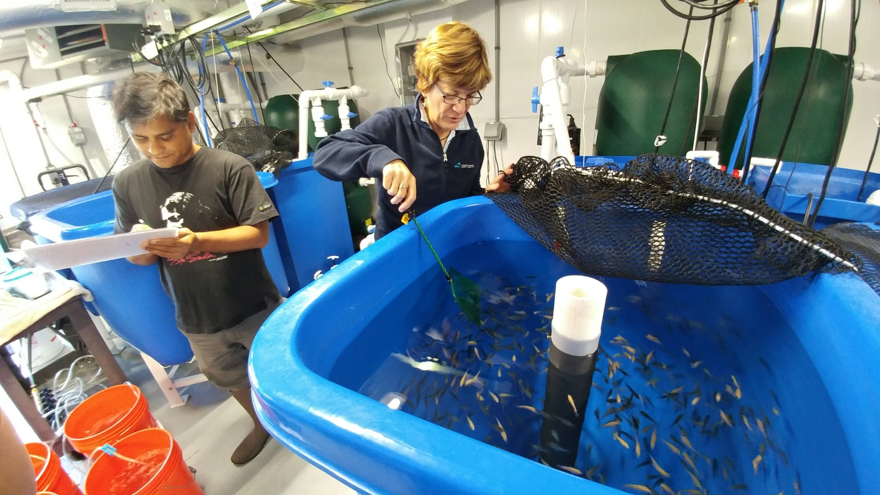 photo image Making aquafeed more sustainable: Scientists develop feeds using a marine microalga co-product