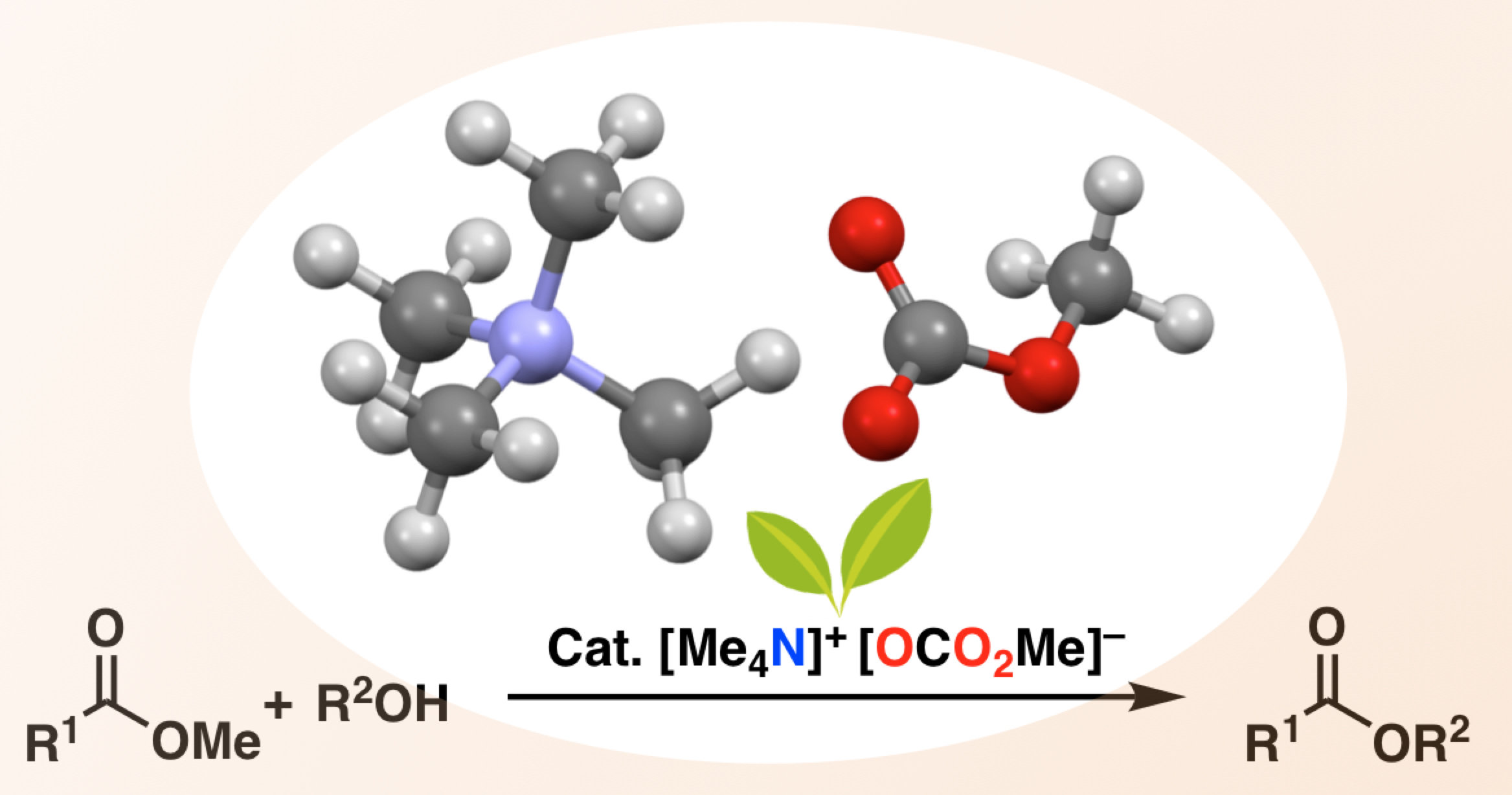 Metal Free Catalyst Extends The Range Of Ester Synthesis