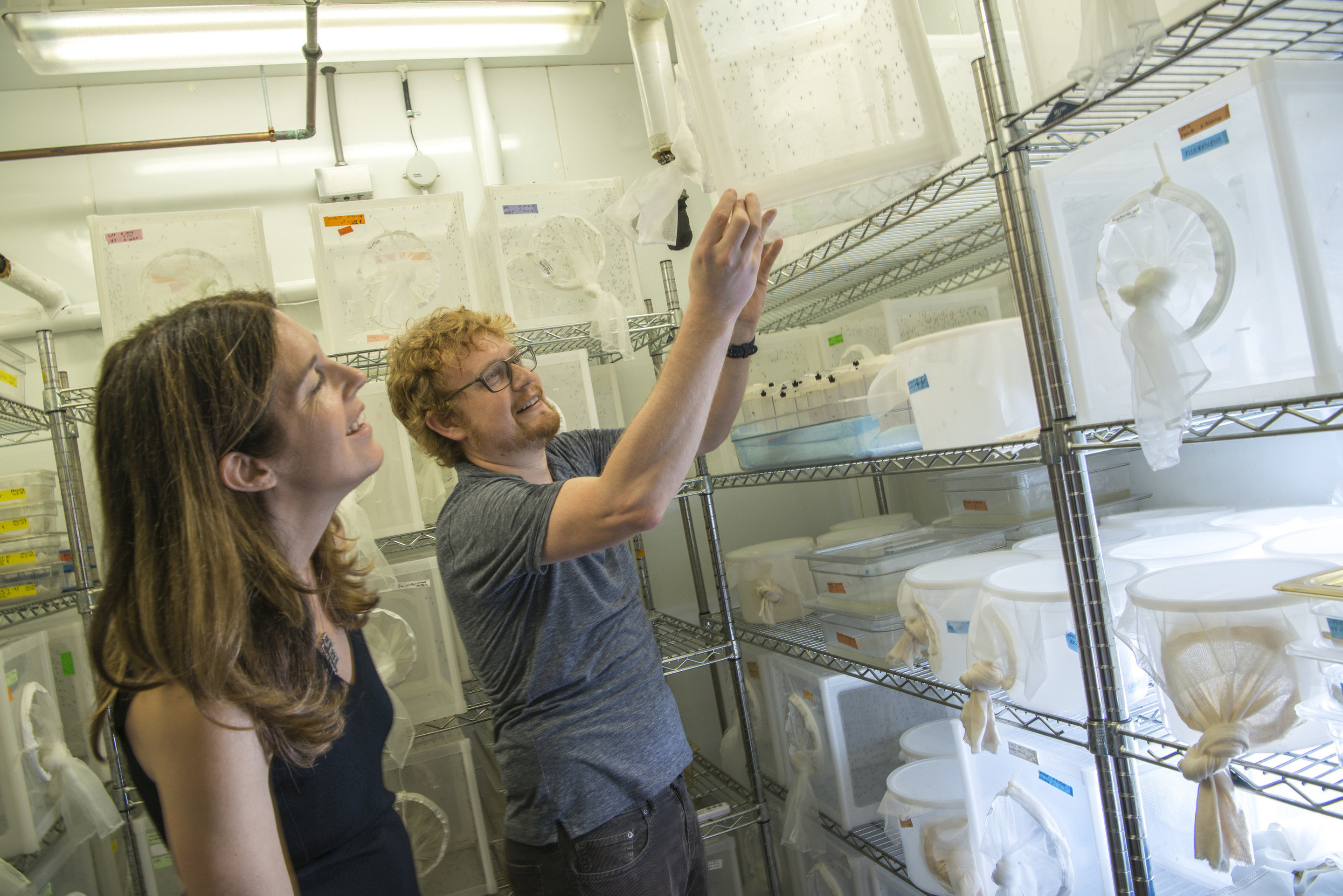Mosquito genome opens new avenues for reducing bug-borne disease thumbnail