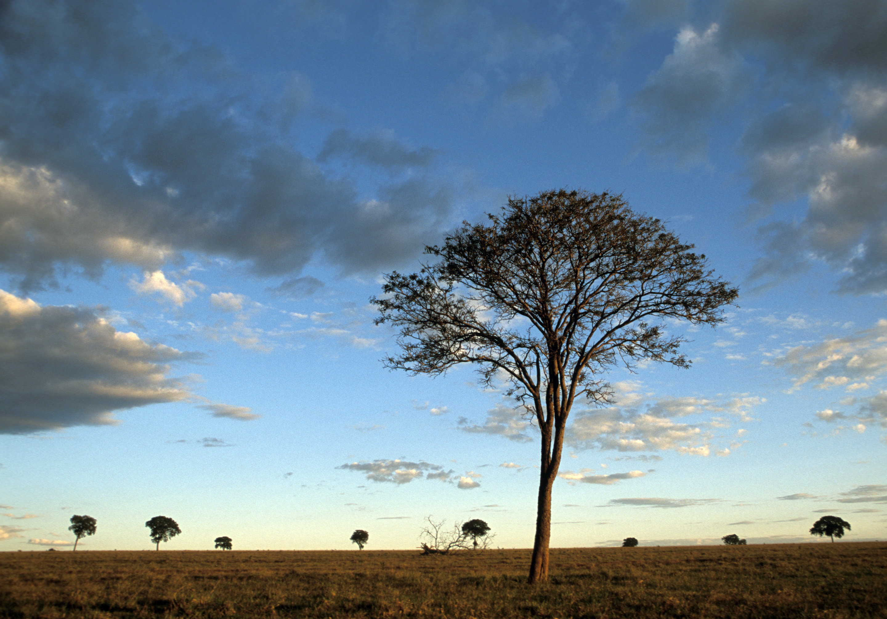 Nature in steep decline due to human activities: WWF ...