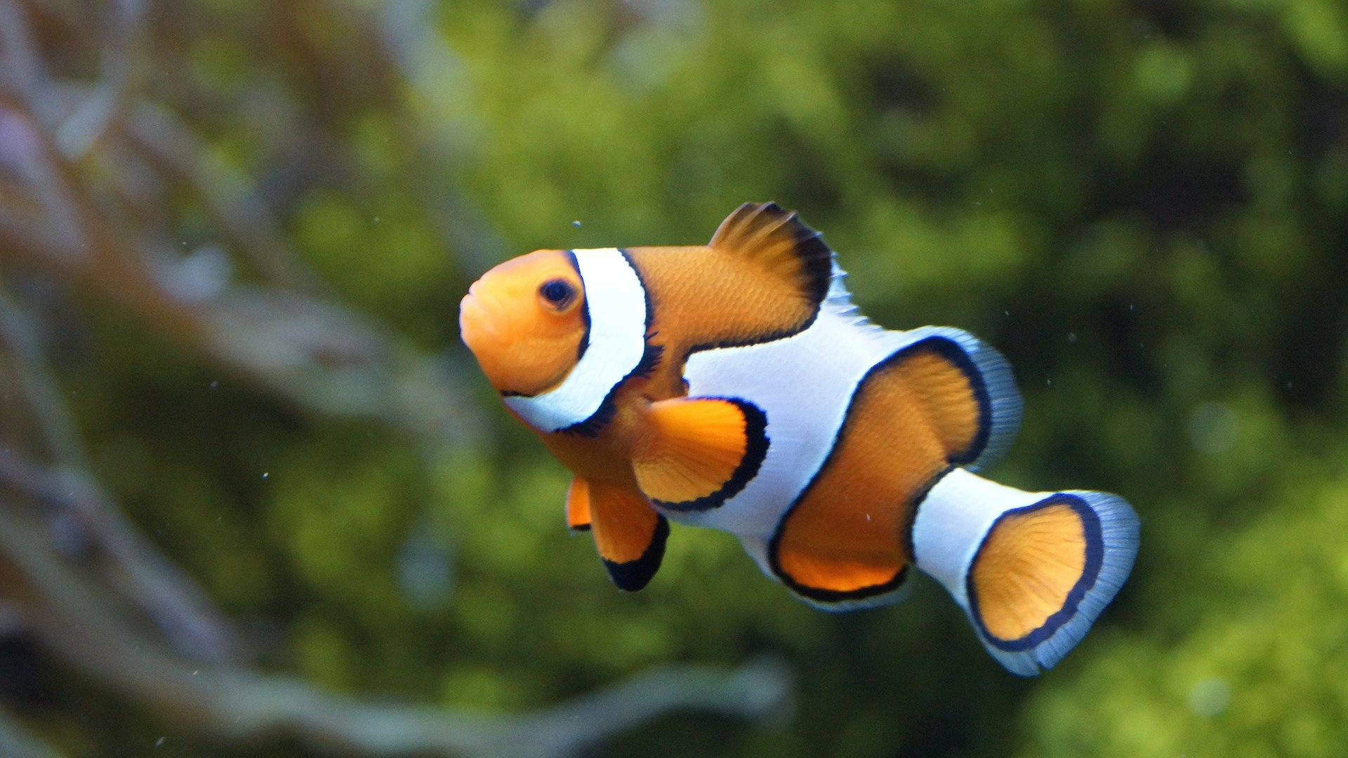 photo of 'The Nemo effect' is untrue: Animal movies promote awareness, not harm, say researchers image