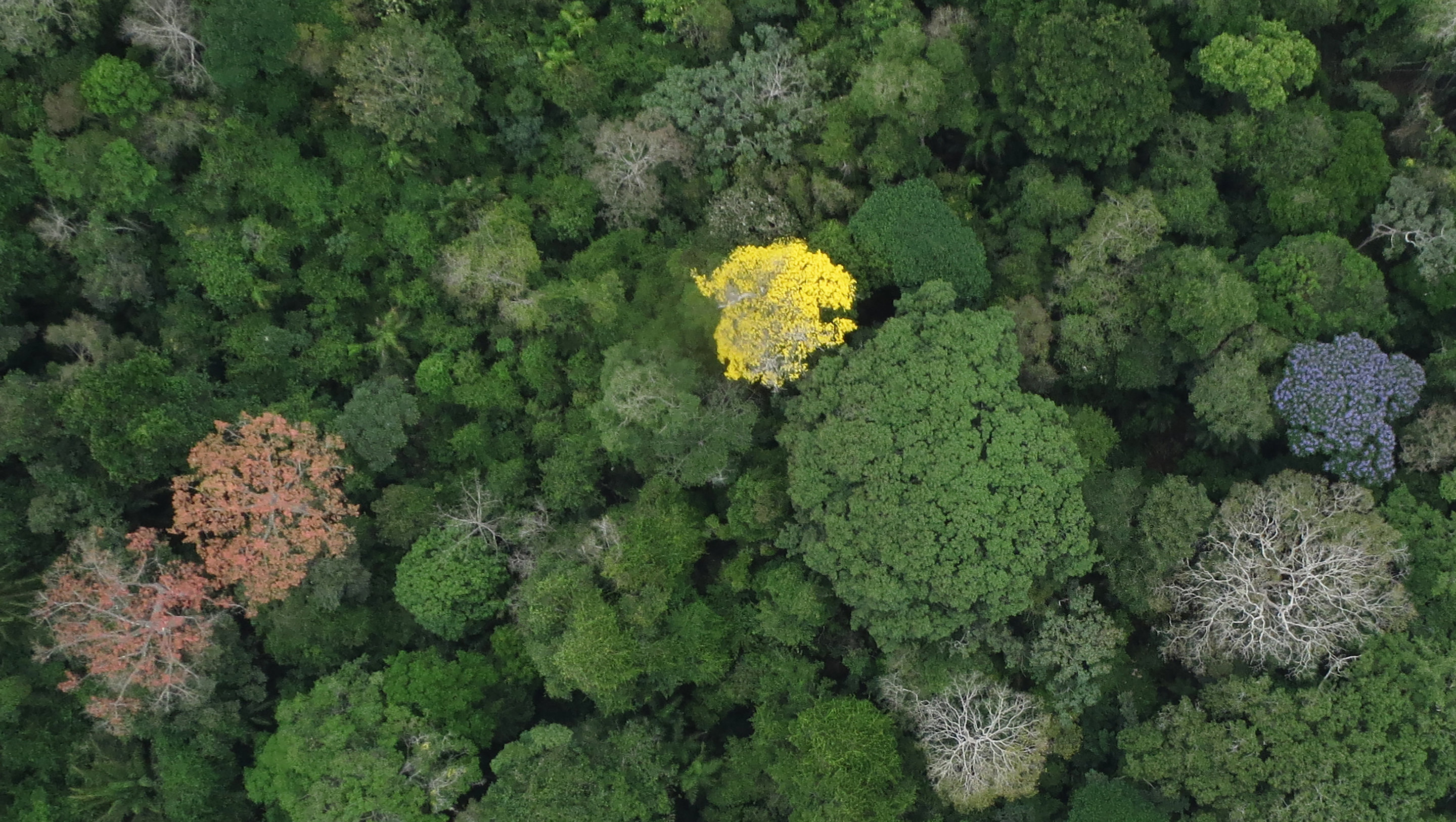 New Study Answers Old Questions About Why Tropical Forests Are So