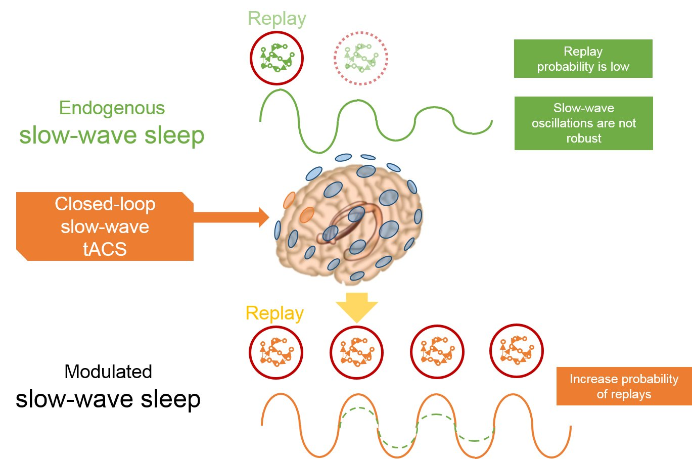 Overnight Brain Stimulation Improves Memory Alternating Current Diagram Closed Loop Transcranial Matching The Endogenous Slow Wave Oscillations During Sleep Boosts Offline Consolidation