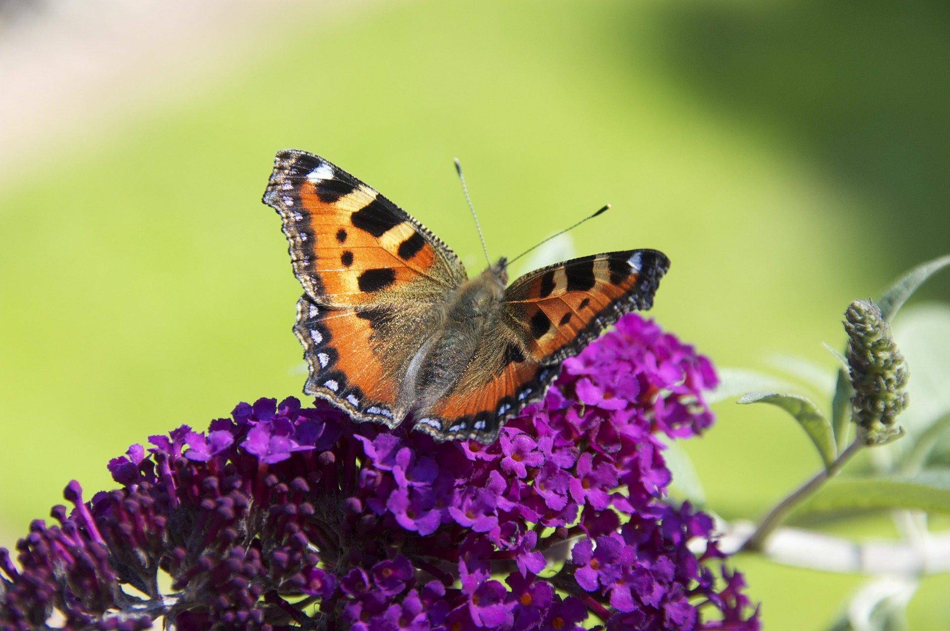 Biodiversity loss raises risk of 'extinction cascades'